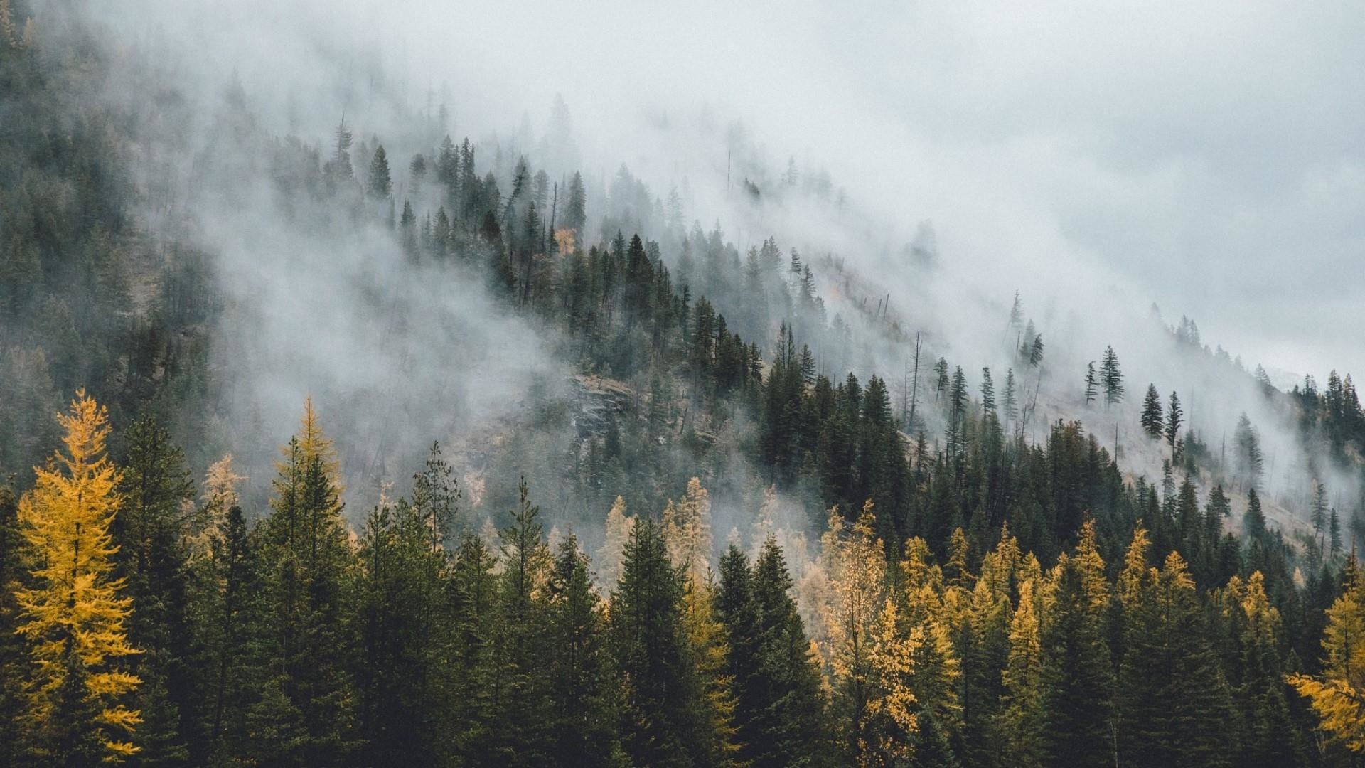 Res: 1920x1080, Misty Pine Forest Wallpaper | Wallpaper Studio 10 | Tens of thousands HD  and UltraHD wallpapers for Android, Windows and Xbox