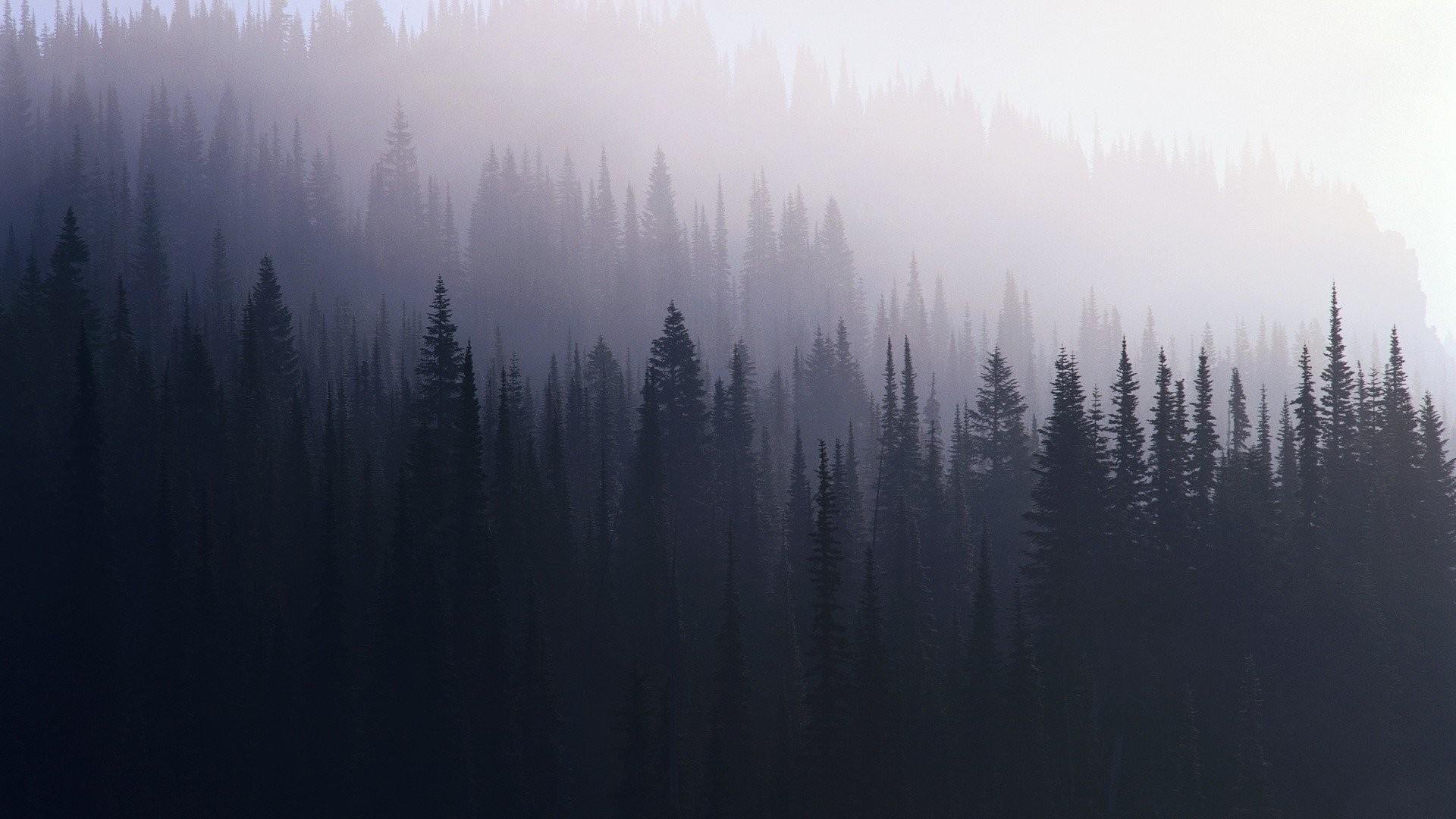 Res: 1920x1080, Pine Tree Wallpaper