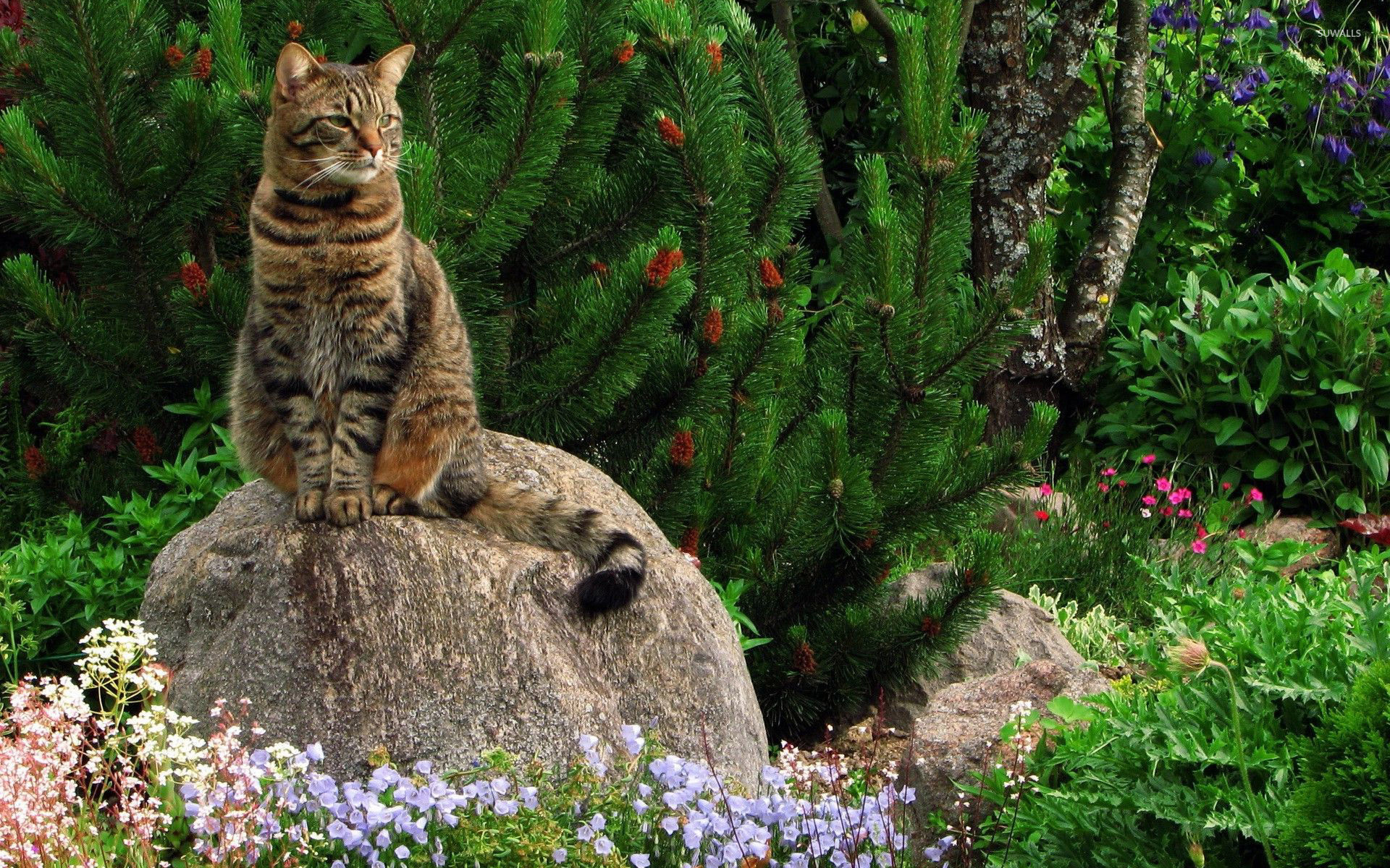 Res: 1920x1200, Cat on the rock near a pine tree wallpaper