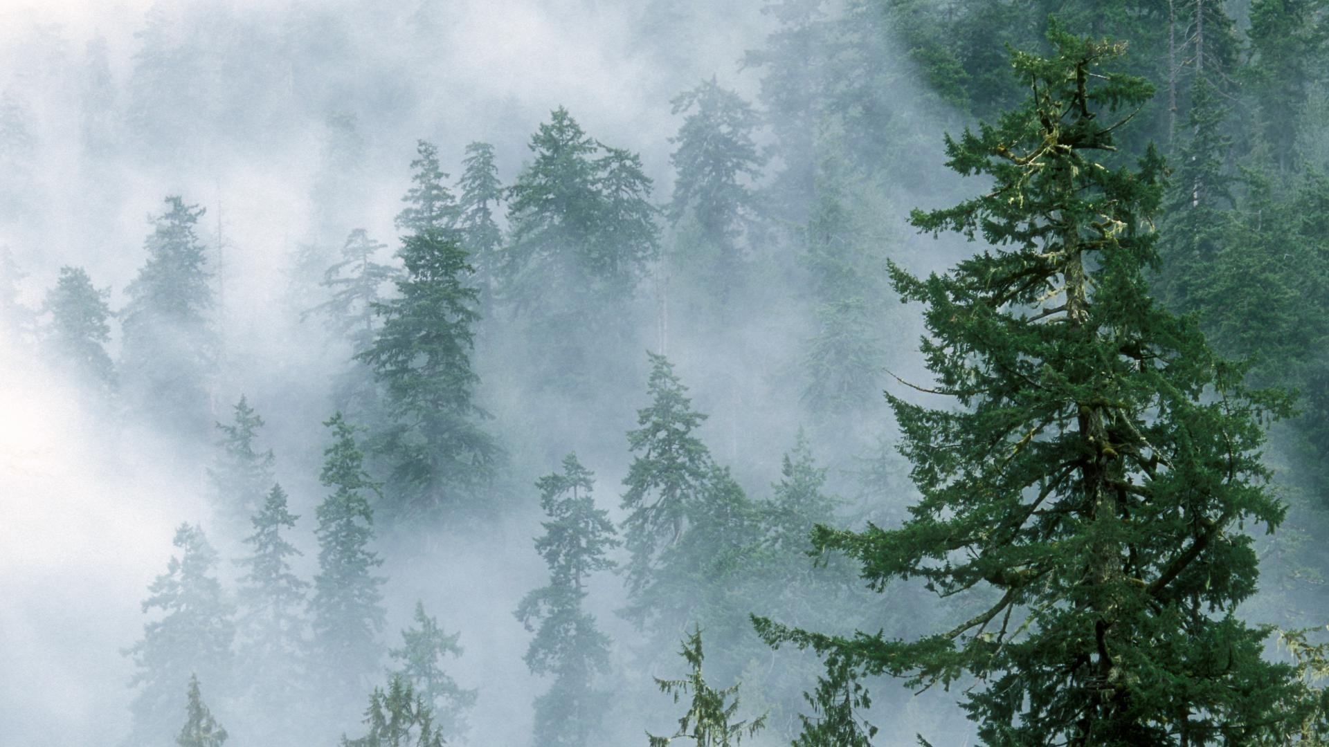 Res: 1920x1080, Foggy Forest Wallpapers HD.
