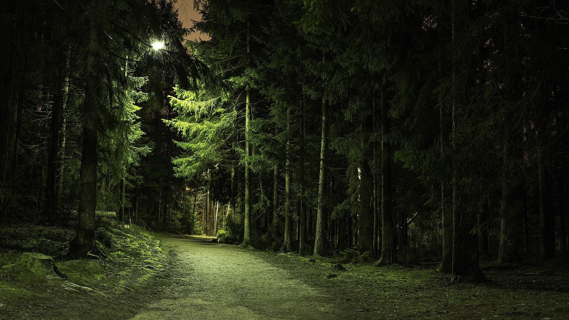 Res: 1920x1080, nature, Trees, Forest, Green, Branch, Path, Lights, Landscape, Pine Trees,  Dirt Road Wallpapers HD / Desktop and Mobile Backgrounds