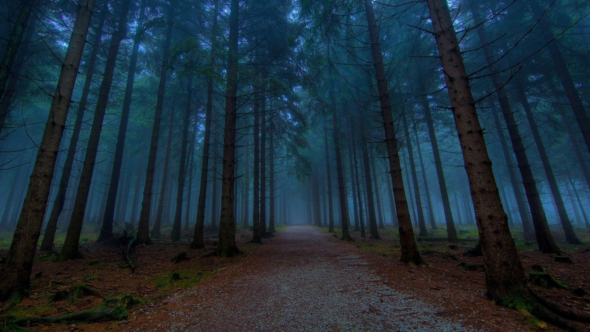 Res: 1920x1080, Dark Pine Forest Trees Wallpaper