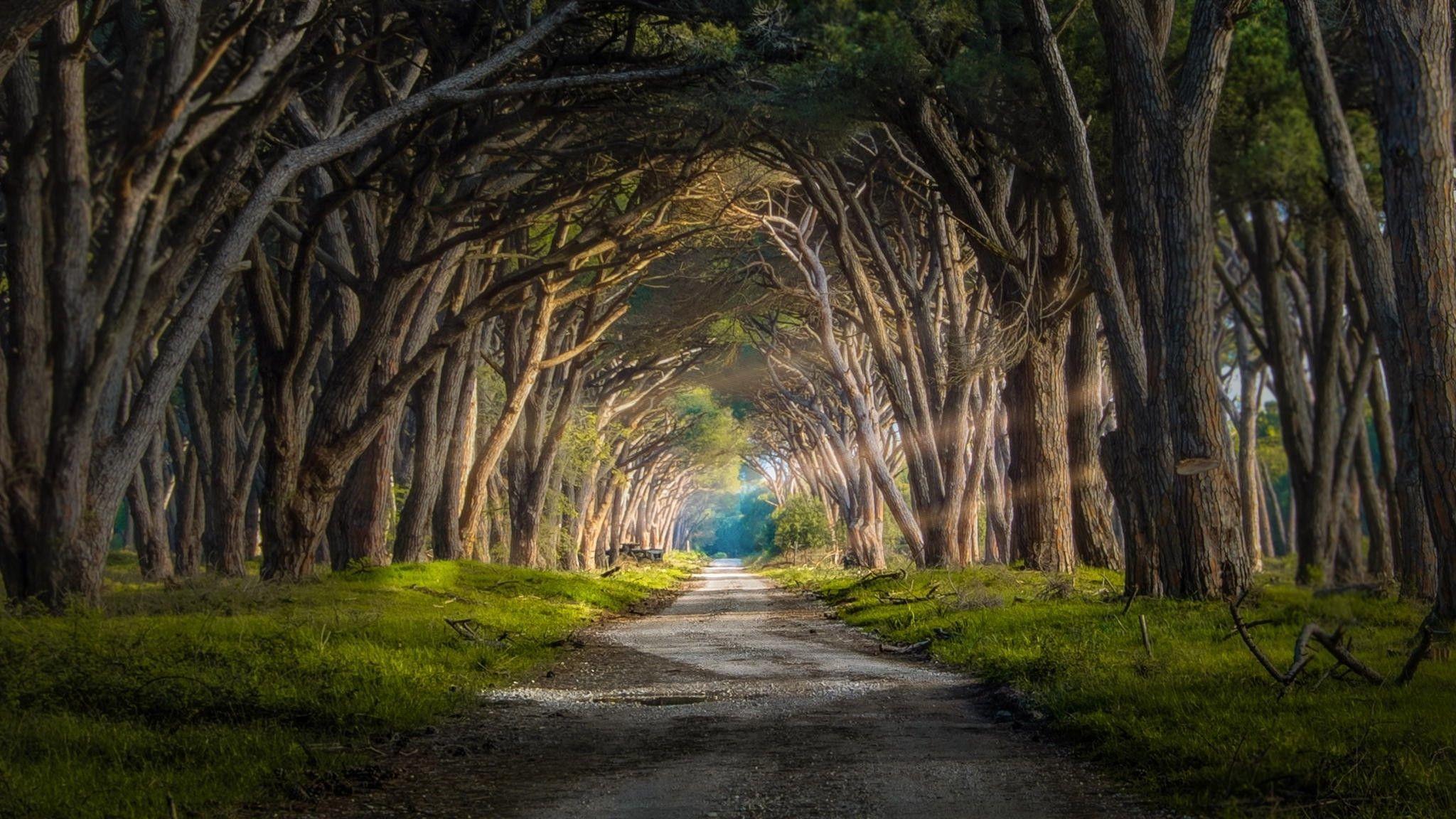 Res: 2048x1152, Sun Light Through Pine Trees Wallpaper Nature Wallpapers