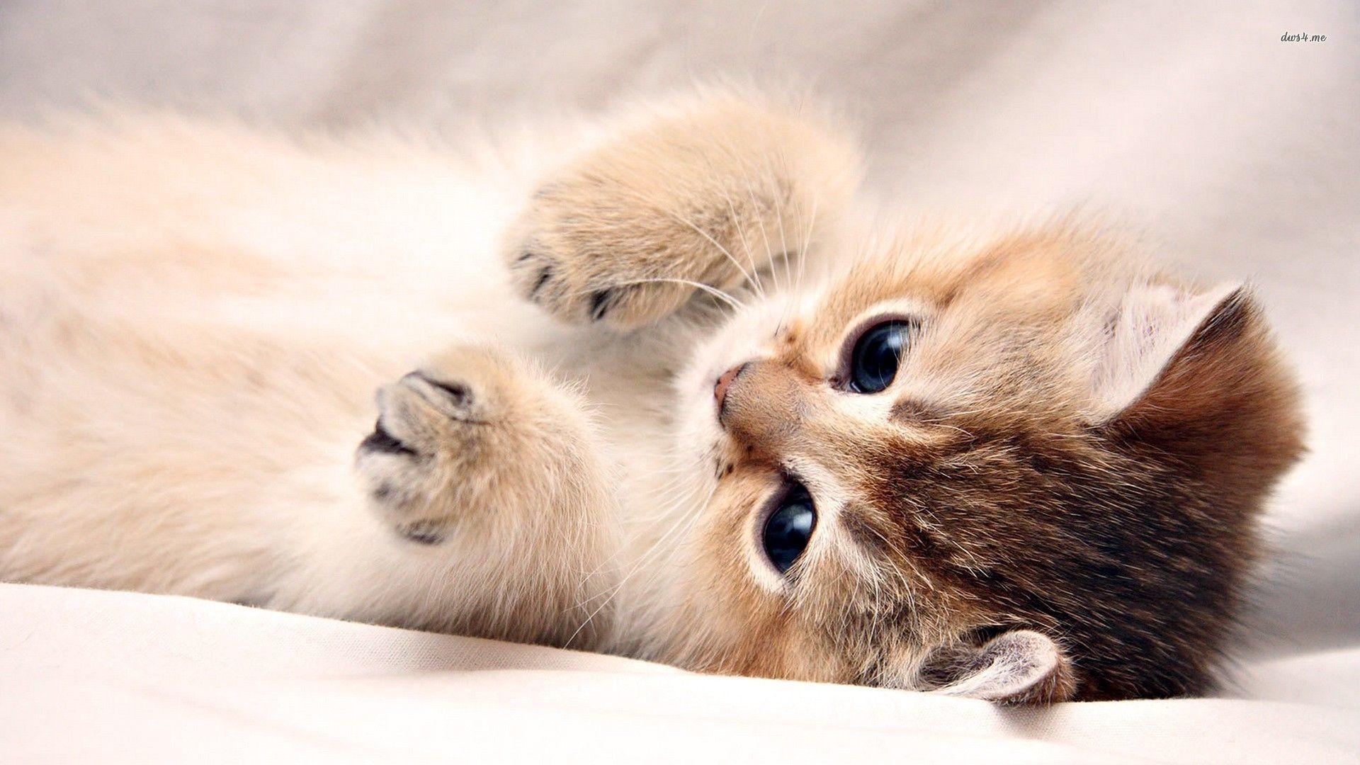 Res: 1920x1080, Kitten wallpaper 1280x800 - Download Best HD Desktop Wallpapers .