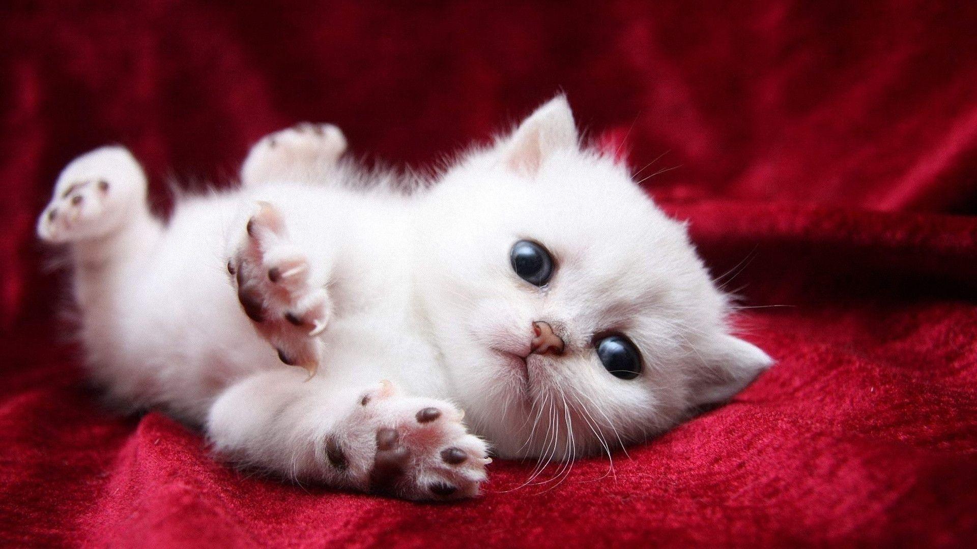 Res: 1920x1080, Wallpapers For > Baby Kitten Wallpaper