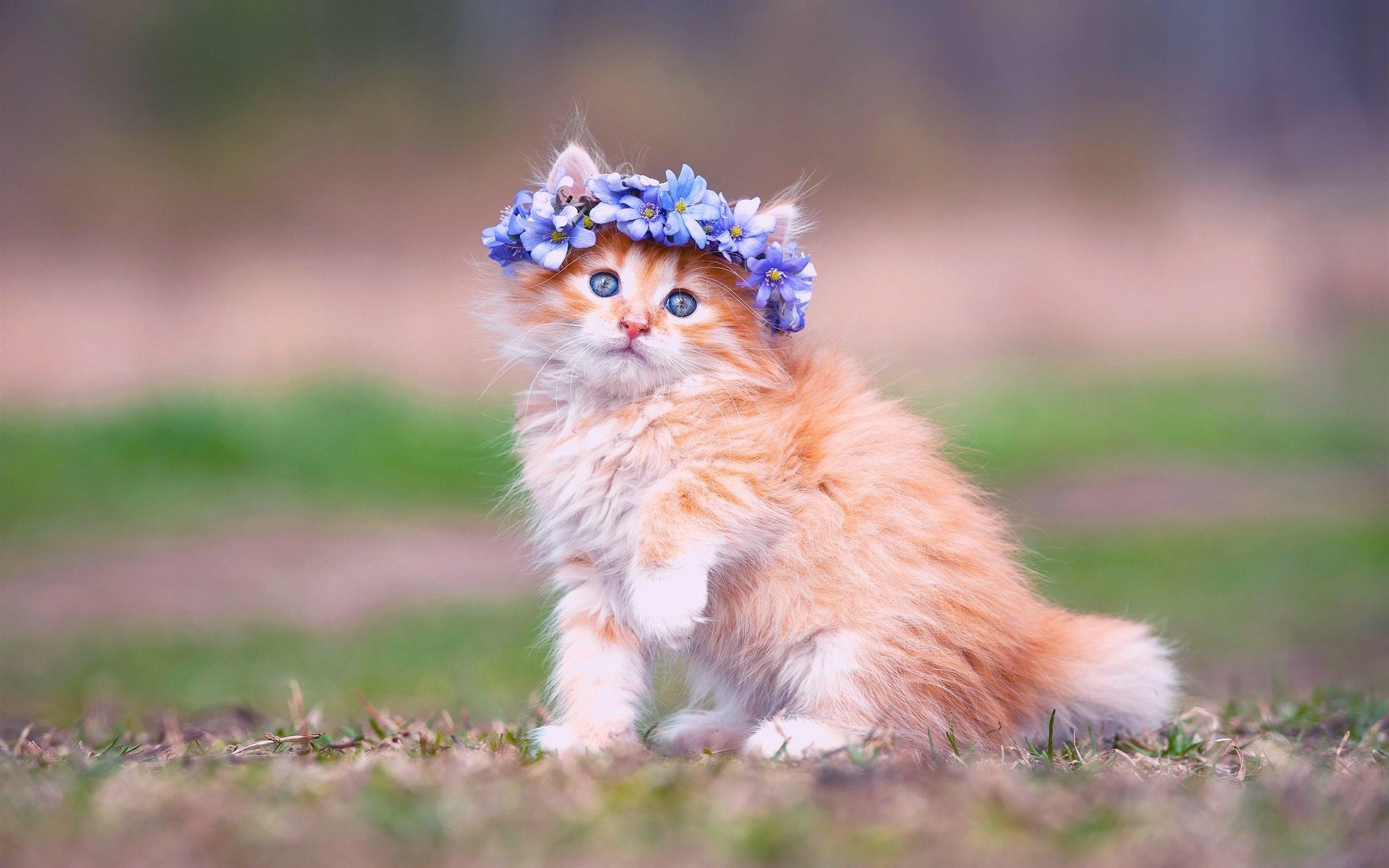 Res: 2560x1600, ... Baby-Kitten-Wallpapers ...