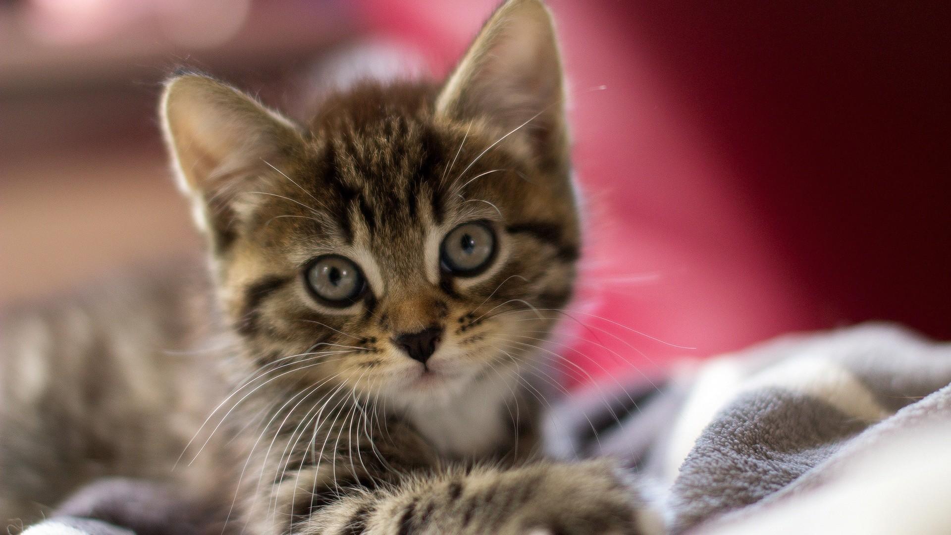 Res: 1920x1080, Baby Kitten Wallpapers 7