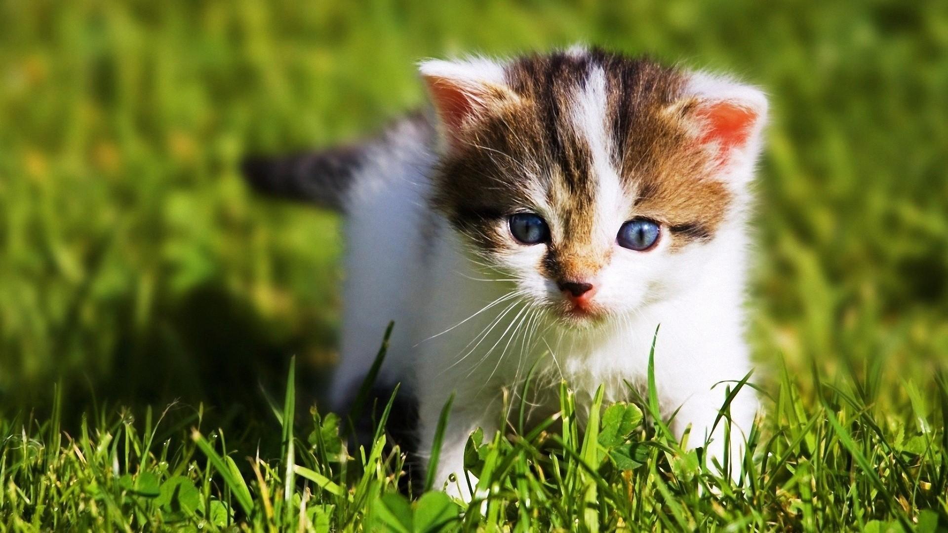 Res: 1920x1080, Animals baby kittens wallpaper