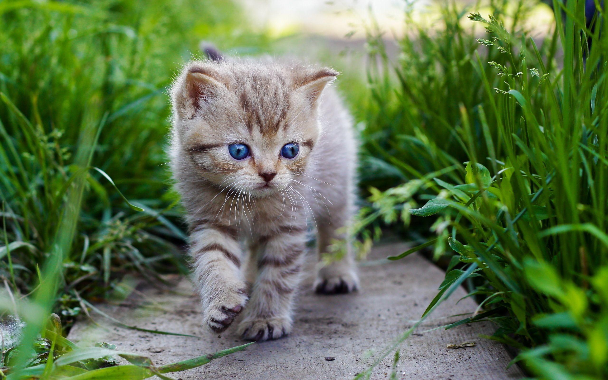 Res: 2560x1600, Cats Kittens Grass Animals kitten eyes baby cute cat wallpaper .