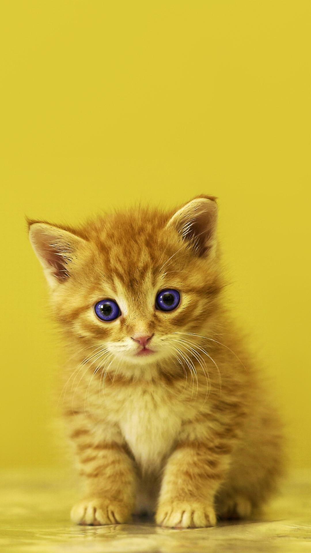 Res: 1080x1920, Baby Kitten Phone Wallpaper