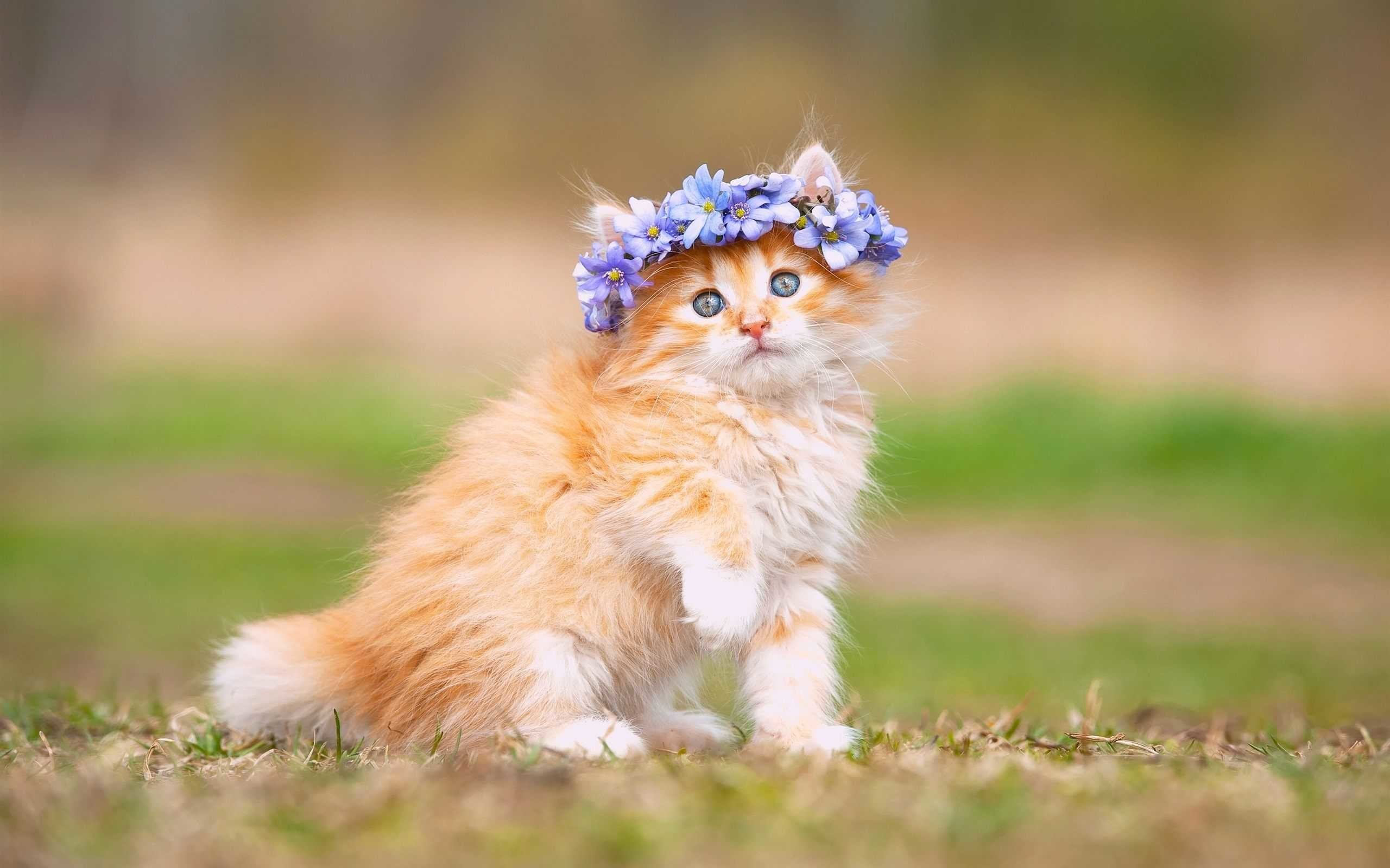 Res: 2560x1600, Cat Hd Kitten Wallpaper Widescreen Cute For Smartphone High Quality