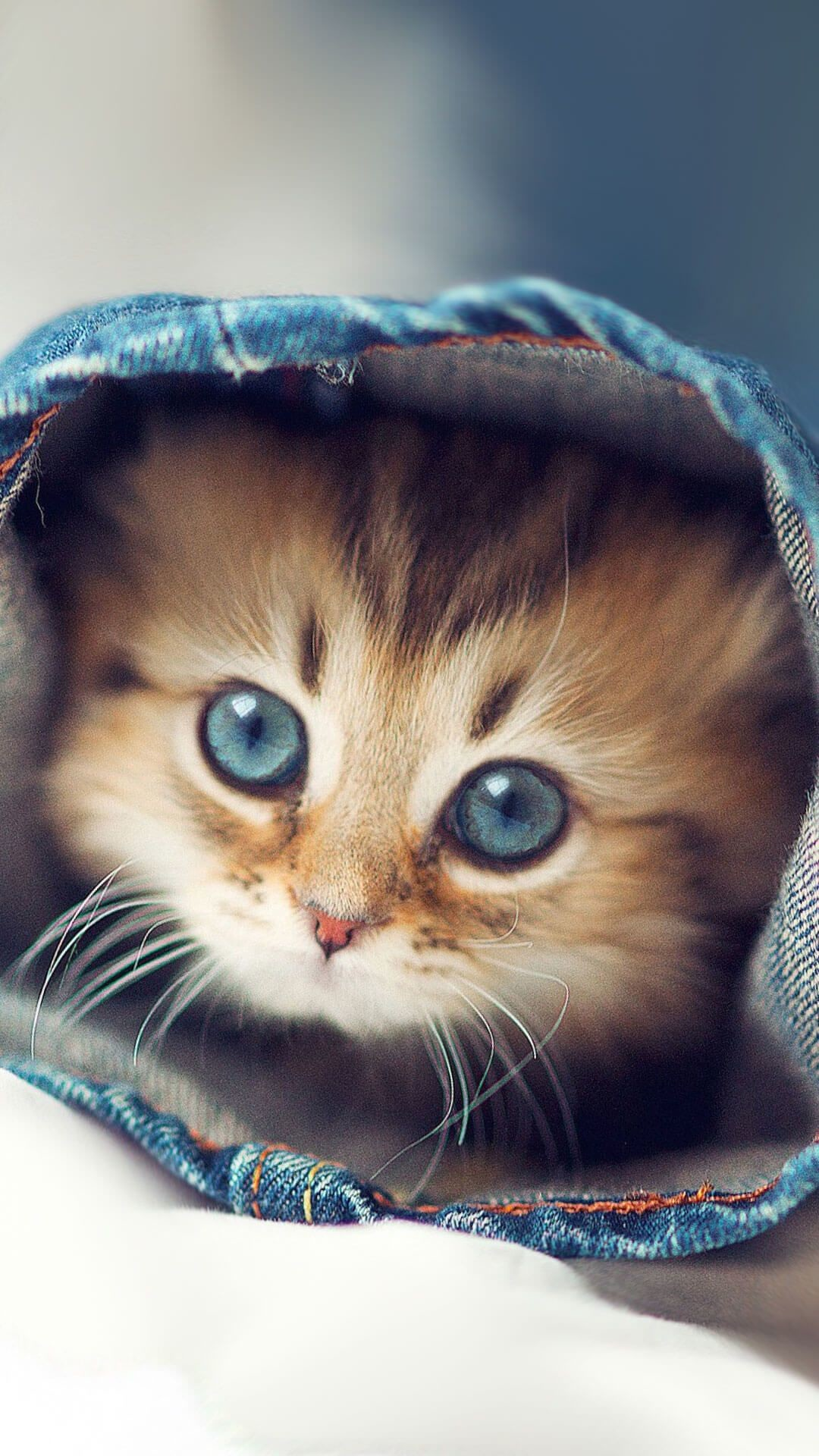 Res: 1080x1920, Cute Kittens Wallpapers For iPhone 6 HD
