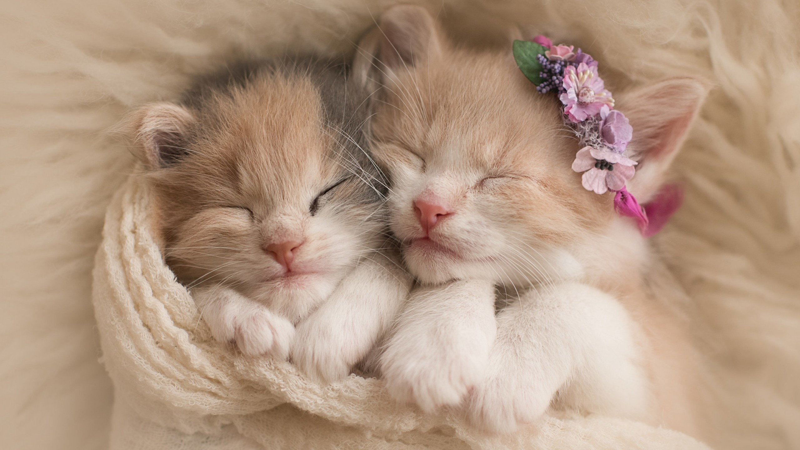 Res: 2560x1440, Cute kittens, Adorable, HD
