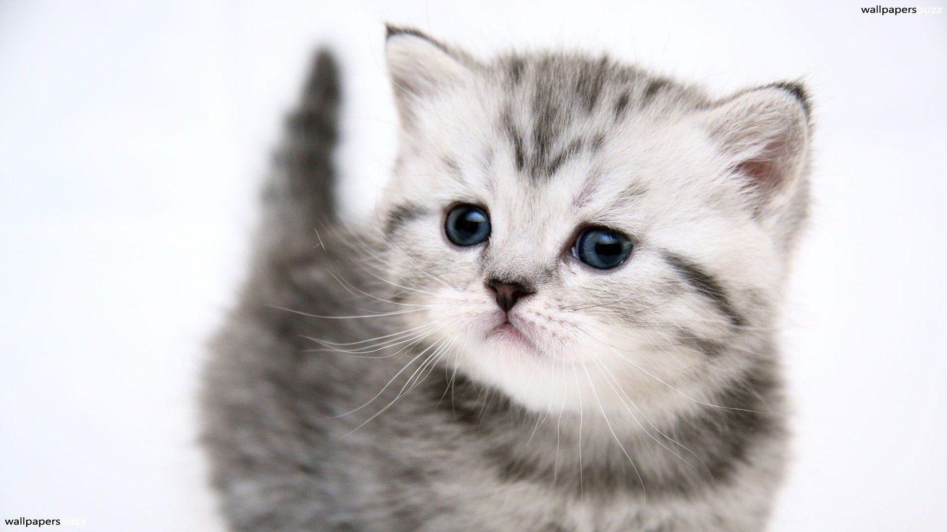 Res: 1920x1080, kittens   Super Cute Baby Kittens Wallpapers Part 2 - Design Hey   Design  Hey .