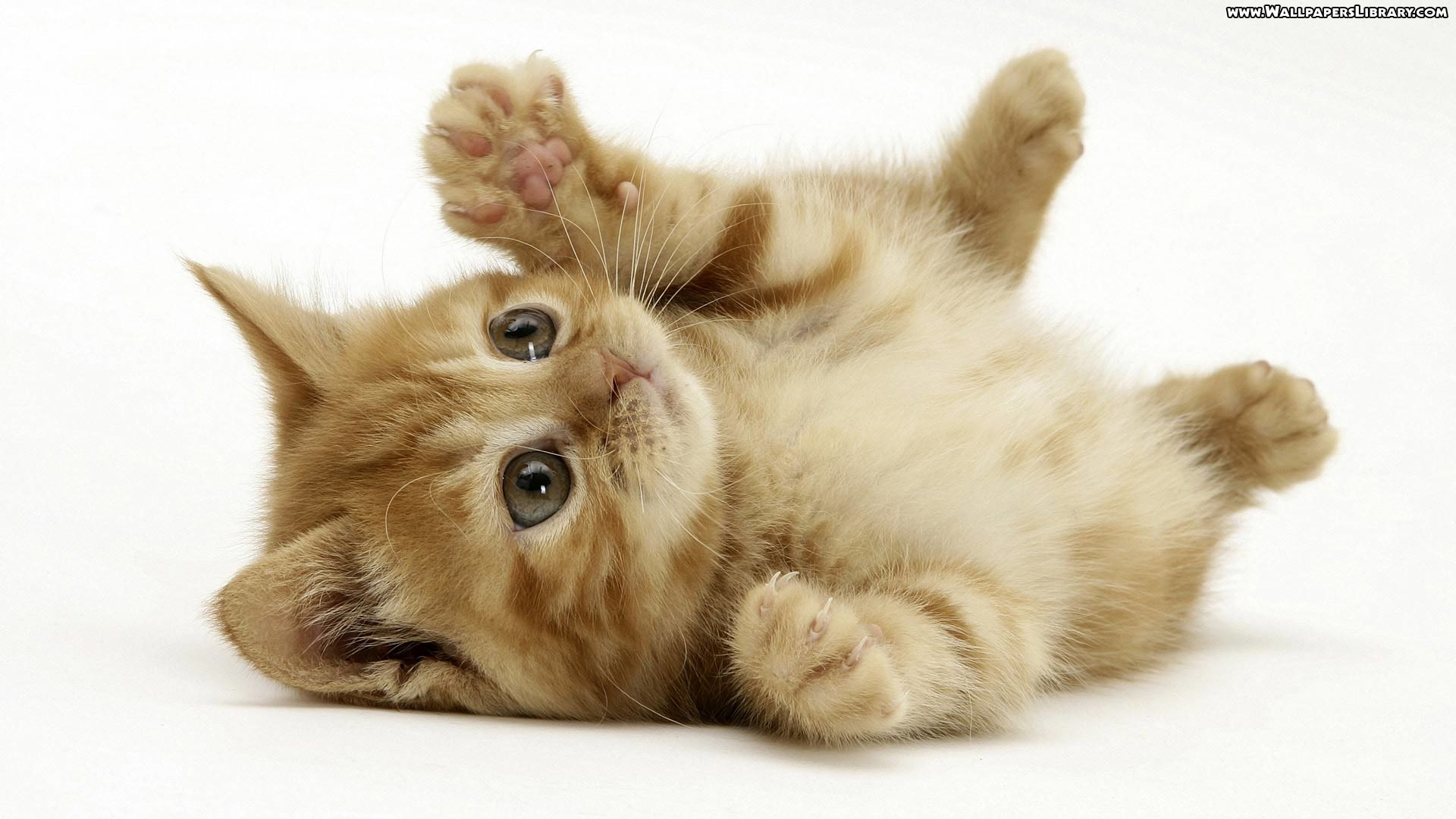 Res: 1920x1080, Kittens Wallpapers Wallpaper Cave - HD Wallpapers