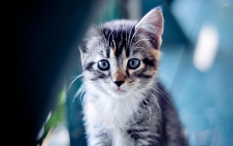 Res: 2880x1800, Cat Kitten Cats Baby Kittens Cute Animal Wallpaper Wallpapers
