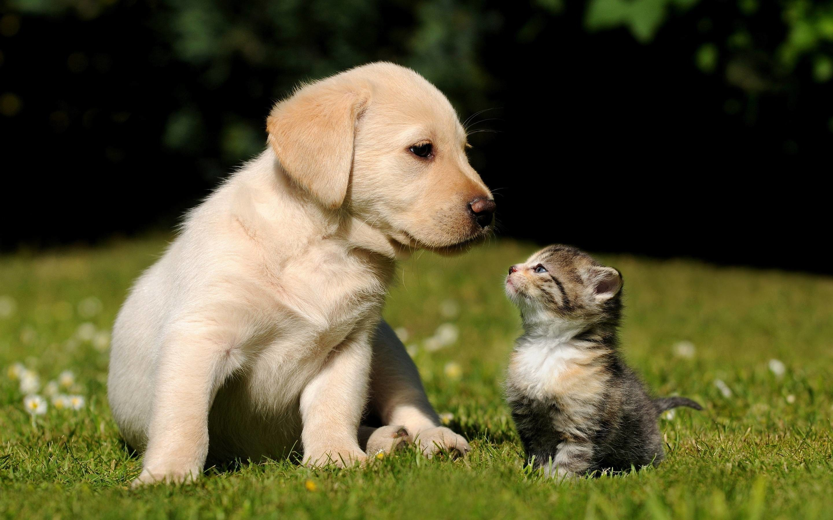 Res: 2880x1800,  Cute Puppy Kitten Wallpapers   Pictures