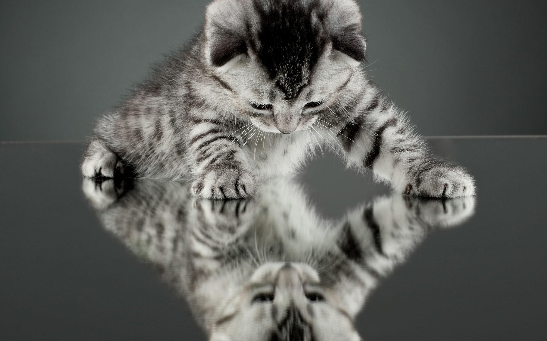 Res: 2880x1800, Kittens kitten cat cats baby cute s wallpaper      708157    WallpaperUP
