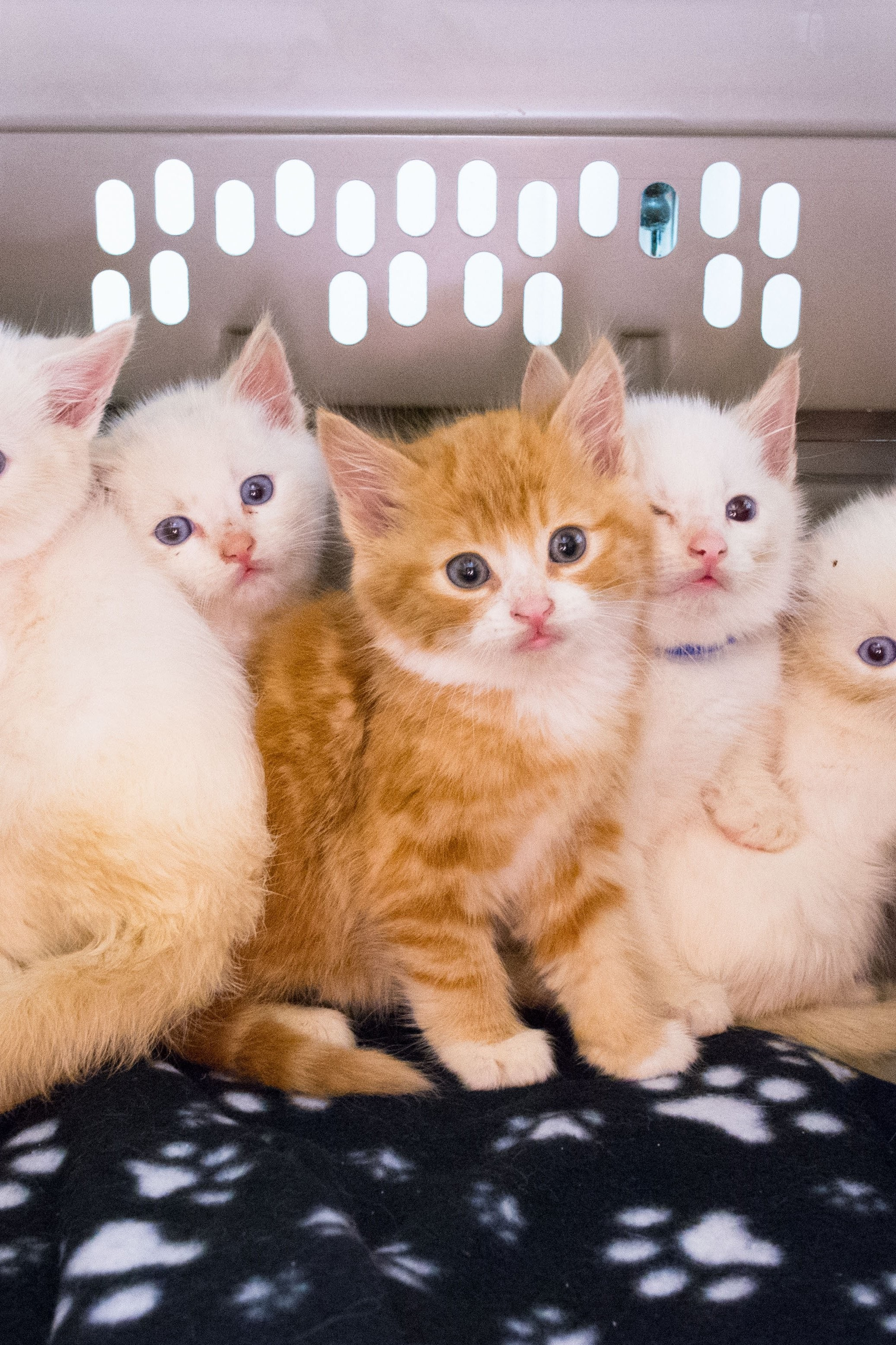 Res: 2073x3110, Kittens high definition amazing mac wallpapers cute cat baby kitten s cats