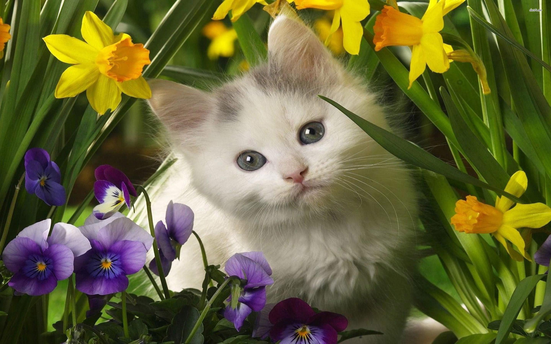 Res: 2880x1800, ... Cute kitten wallpaper  ...