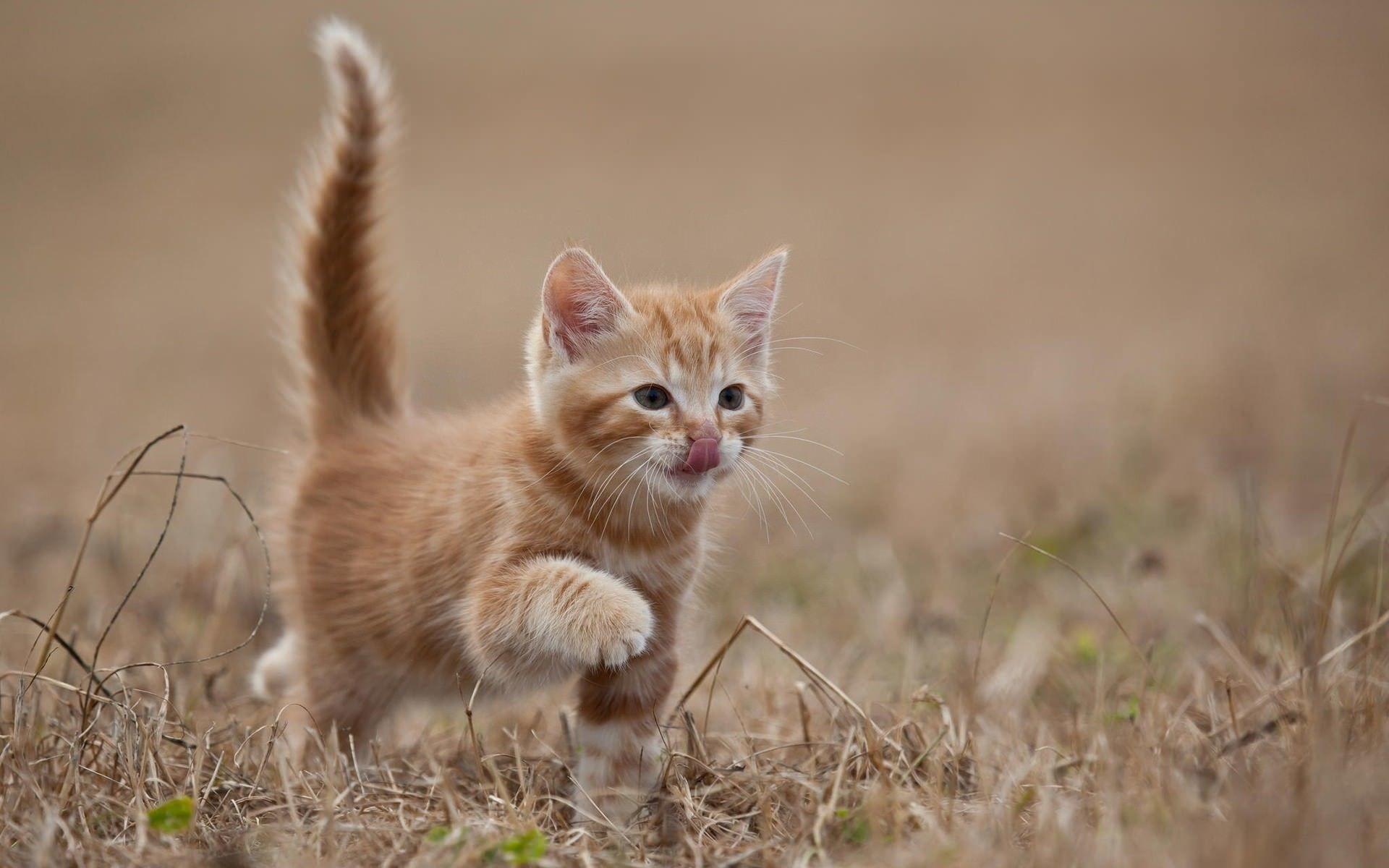Res: 1920x1200, Funny kitten wallpaper  Funny Animal