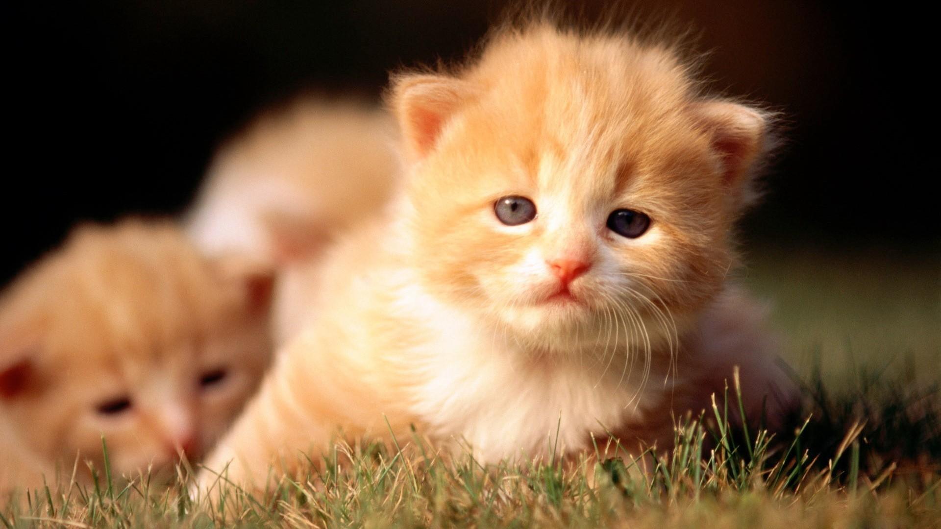 Res: 1920x1080, Cats Kittens Wallpaper  Cats Kittens