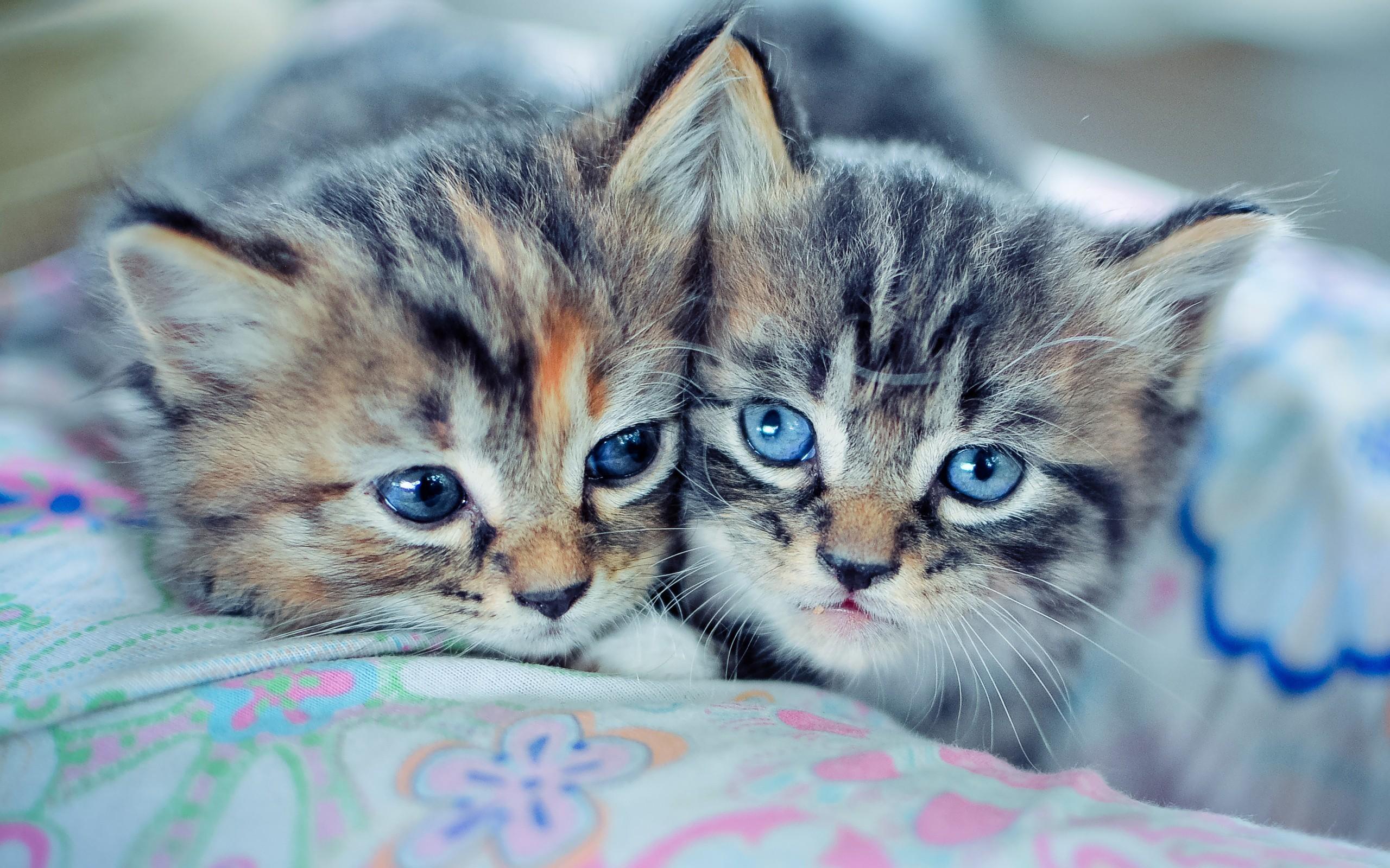 Res: 2560x1600, Animals animal world cats kittens wallpaper