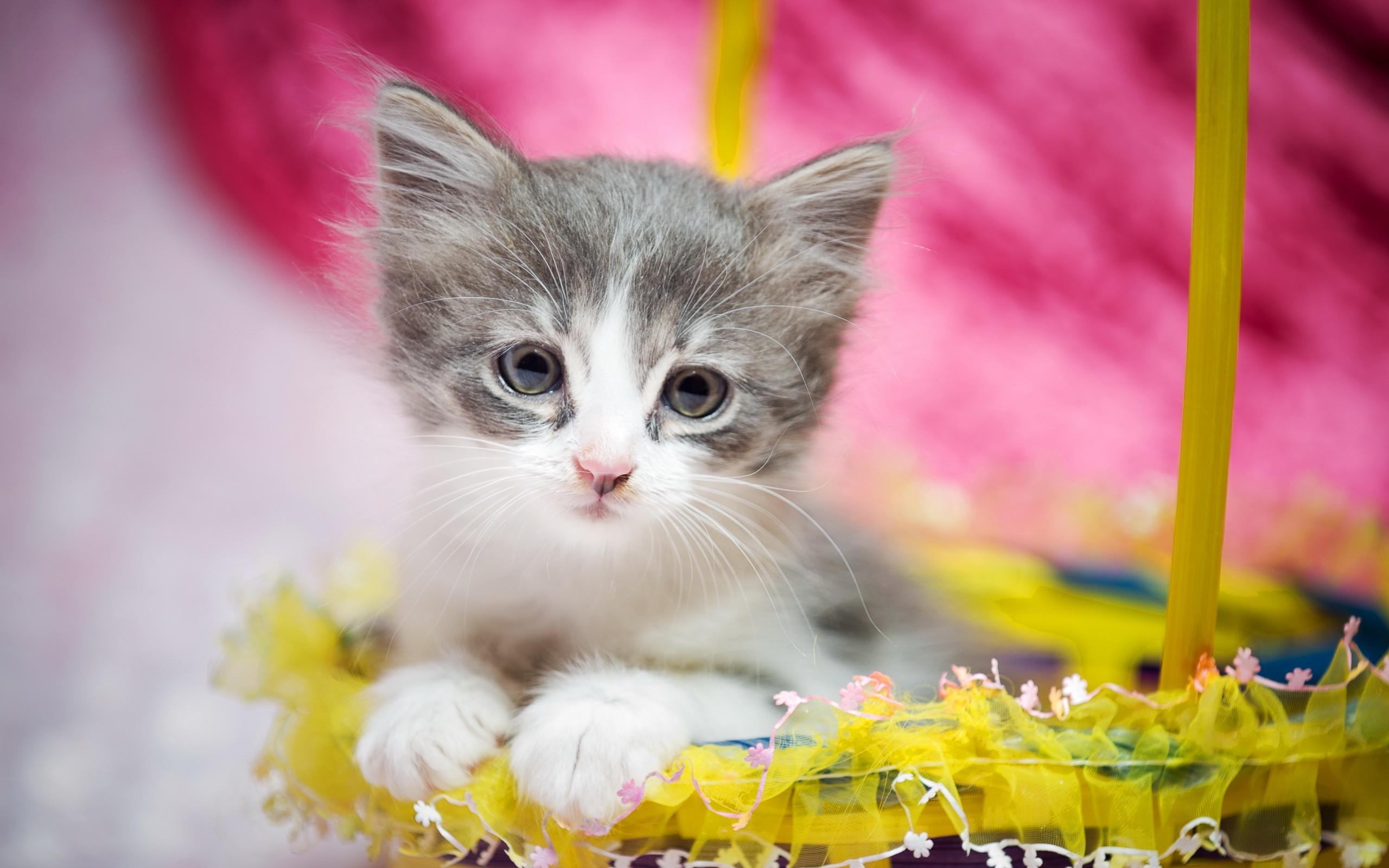 Res: 2560x1600, Cute kitten, Cat, HD
