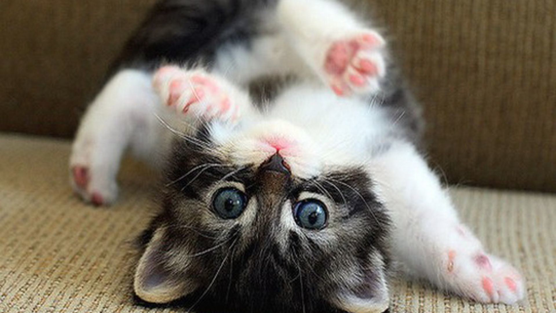 Res: 1920x1080, Funny Kitten Wallpaper HD - Free Download Wallpaper, Pictures .