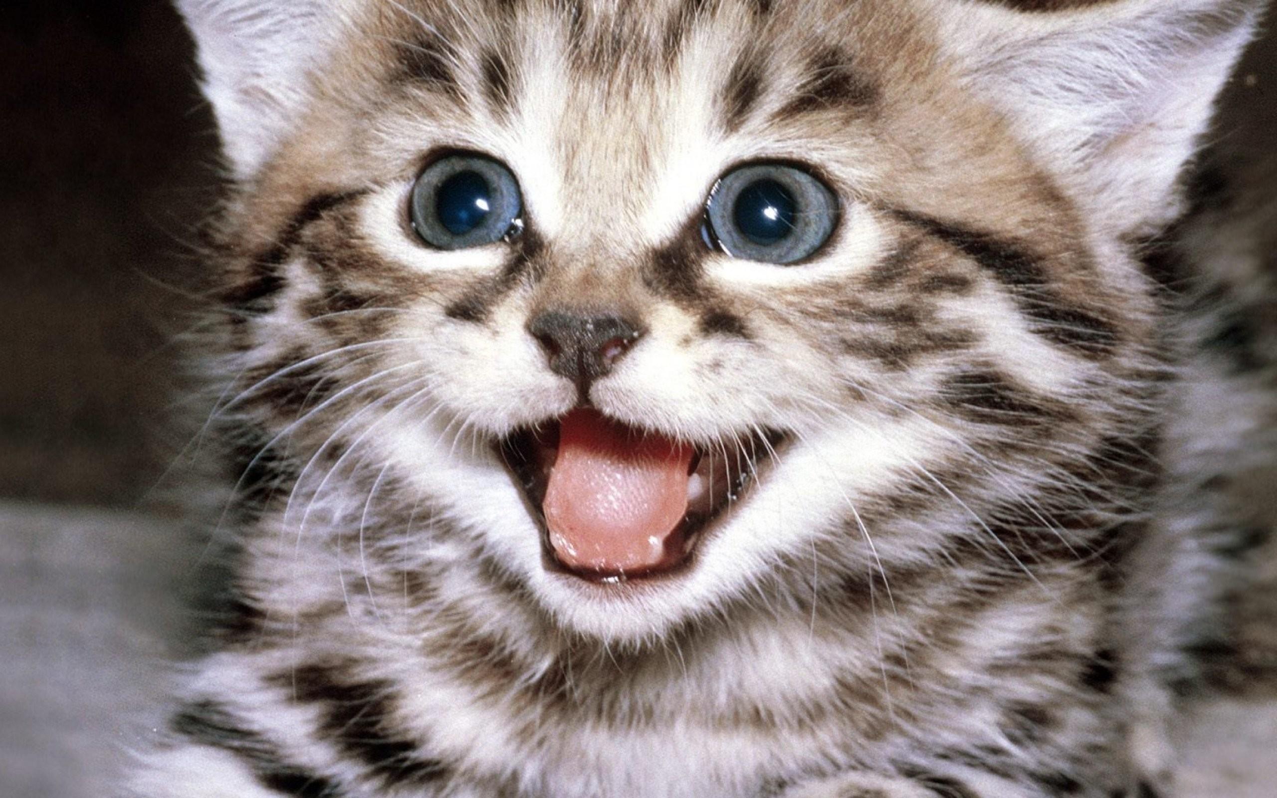 Res: 2560x1600, Kittens kitten cat cats baby cute s wallpaper      708281    WallpaperUP
