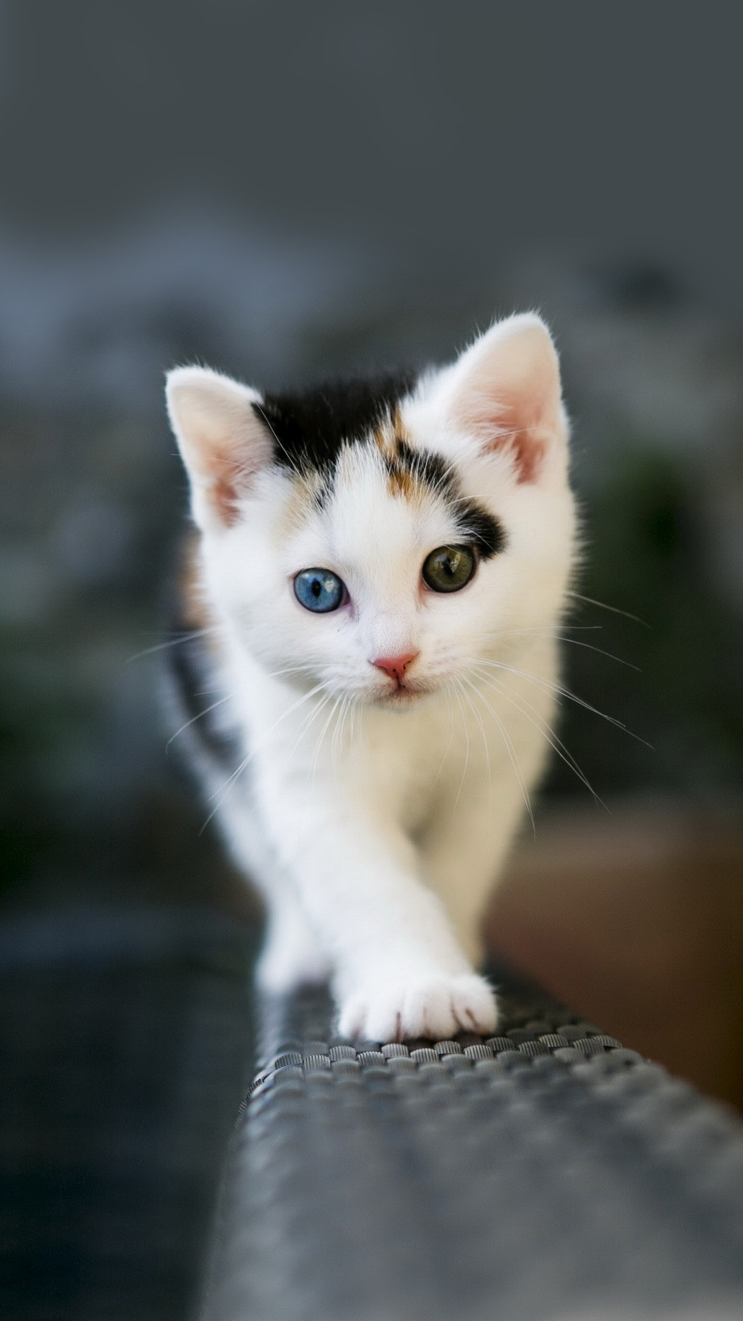 Res: 1080x1920, android phone wallpaper cute 1080×1920 cute kitten download hd images  amazing background images mac desktop wallpapers free pictures smart phone  1080×1920 ...