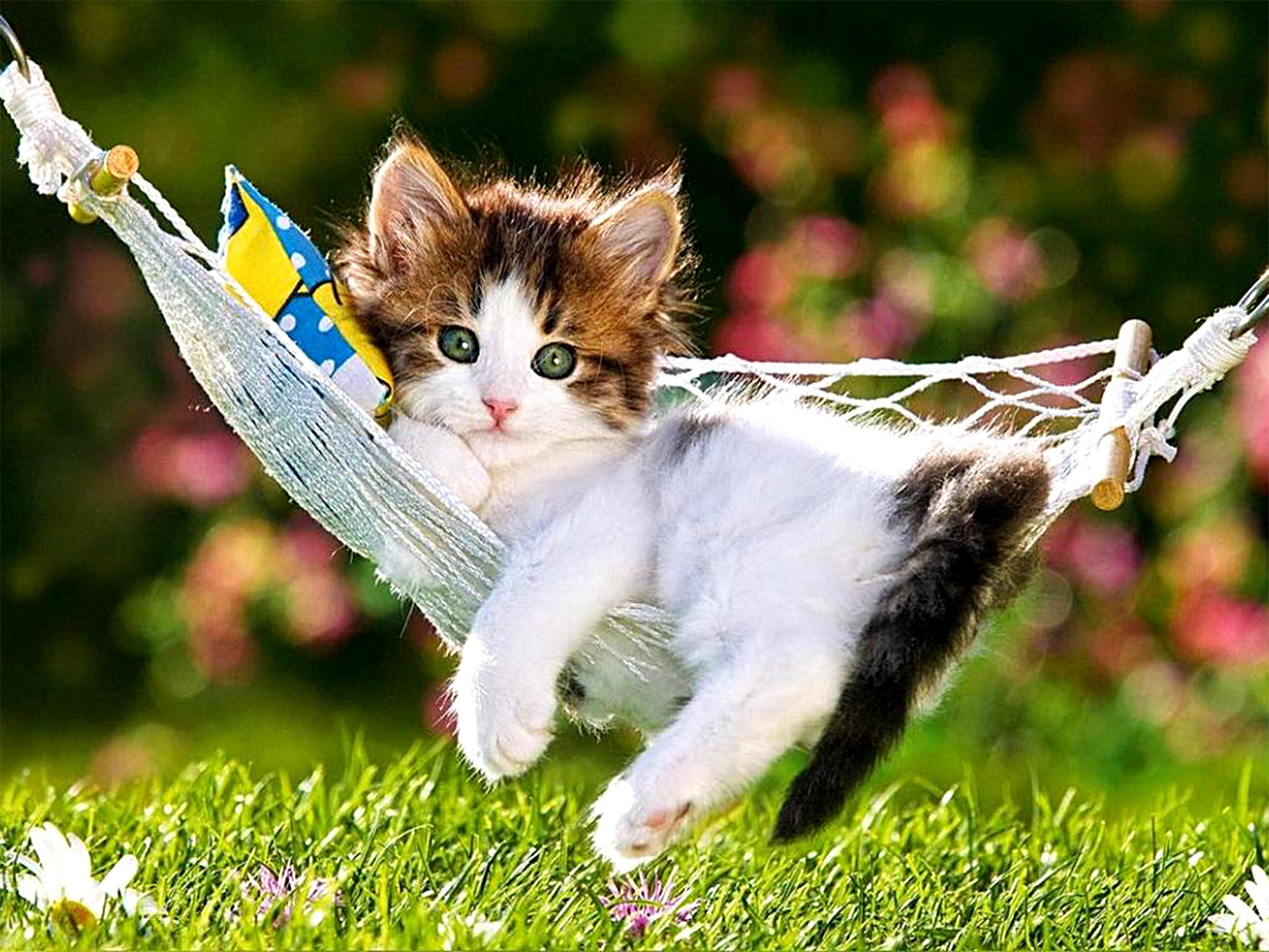 Res: 2400x1800, Animal - Cat Animal Grass Hammock Cute Kitten Wallpaper