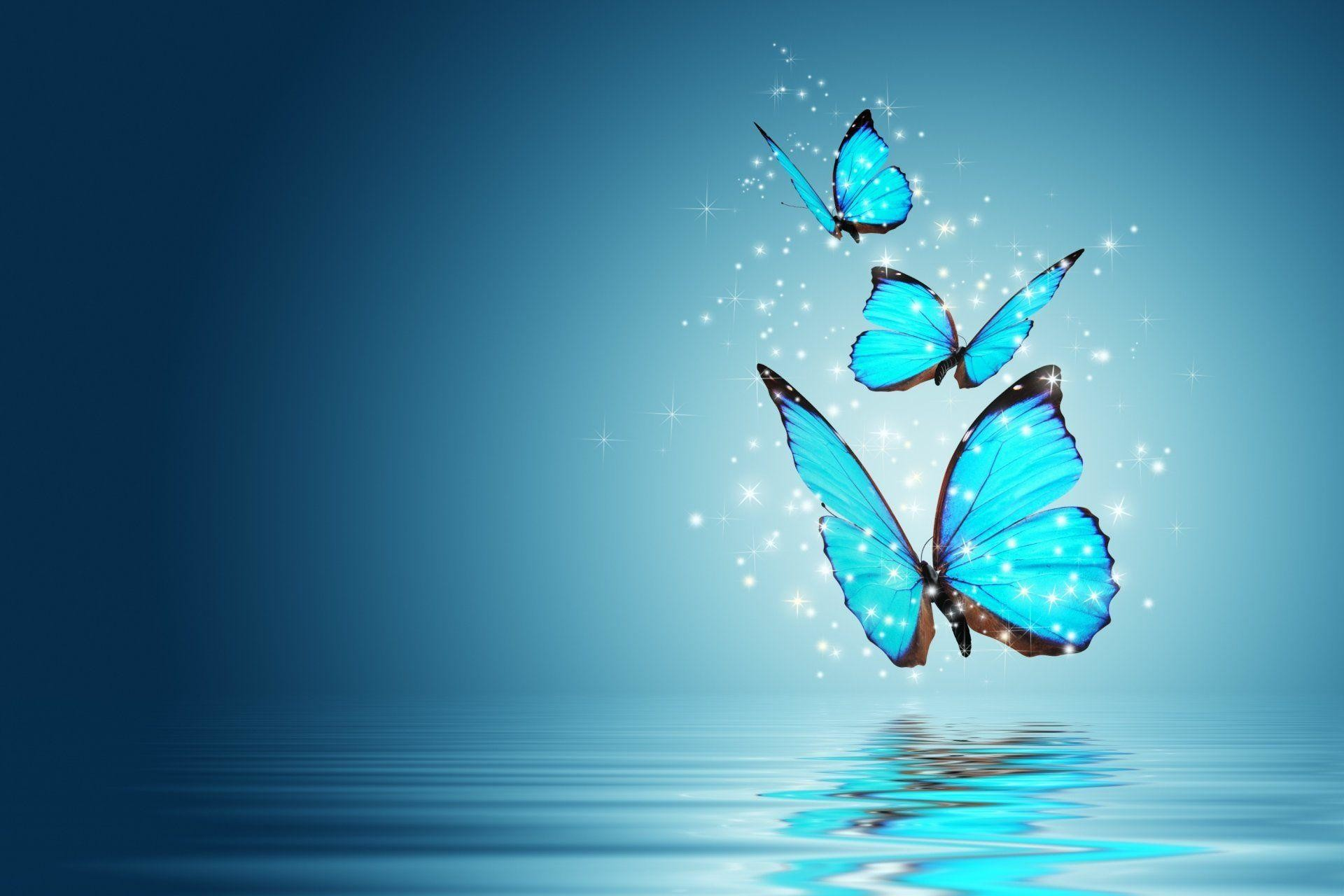 Res: 1920x1280, Butterfly Desktop Background HD Full Screen Wallpapers