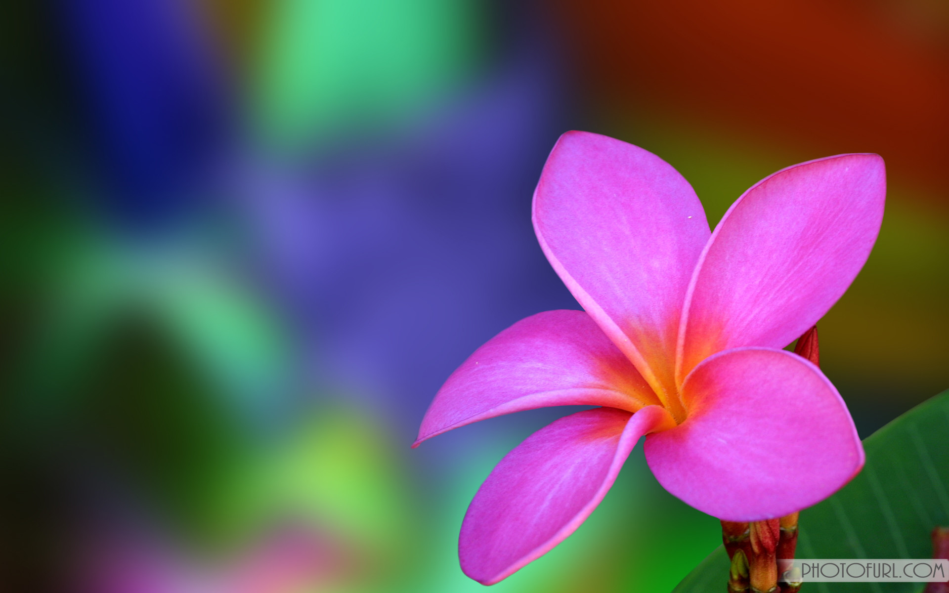 Res: 1920x1200, screen, wallpaper, flower, computer, scenery, wallpapers, laptops