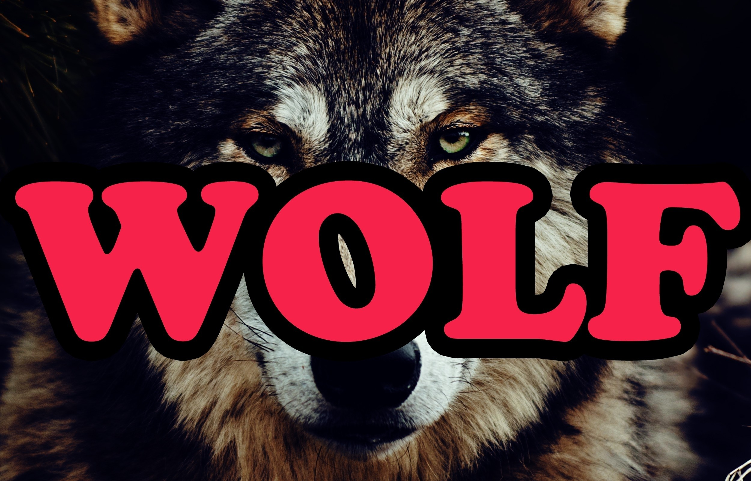 Res: 2500x1600, Alternative tyler the creator odd future wolves wolf gang Wallpaper
