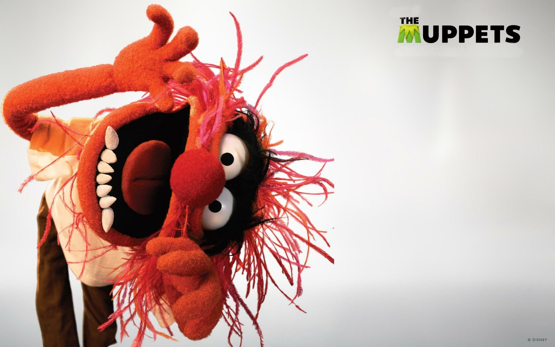 Res: 1920x1200, Explore The Muppets, Animal Wallpaper, and more!
