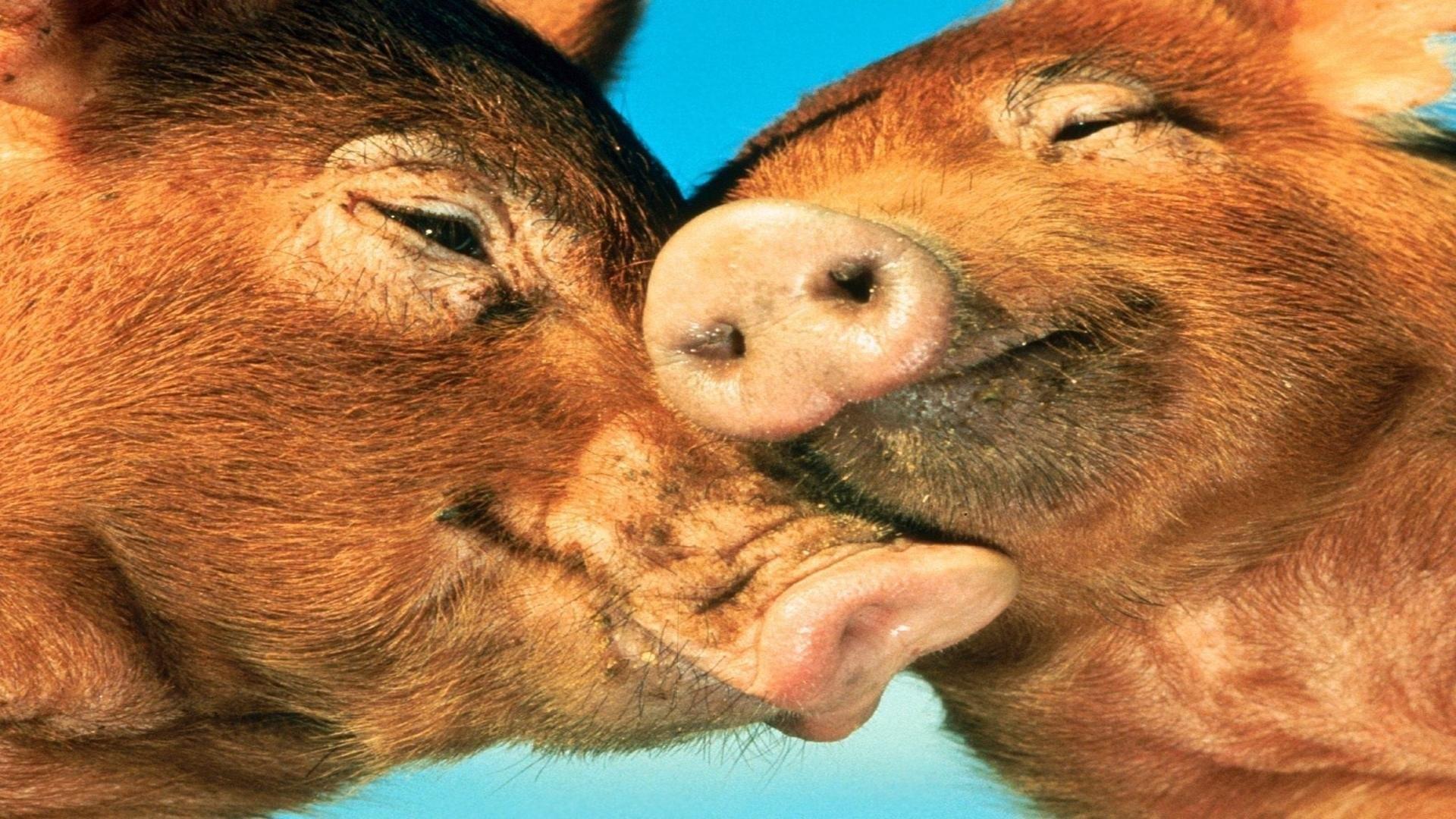 Res: 1920x1080, Muppets Miss Piggy; piggy love