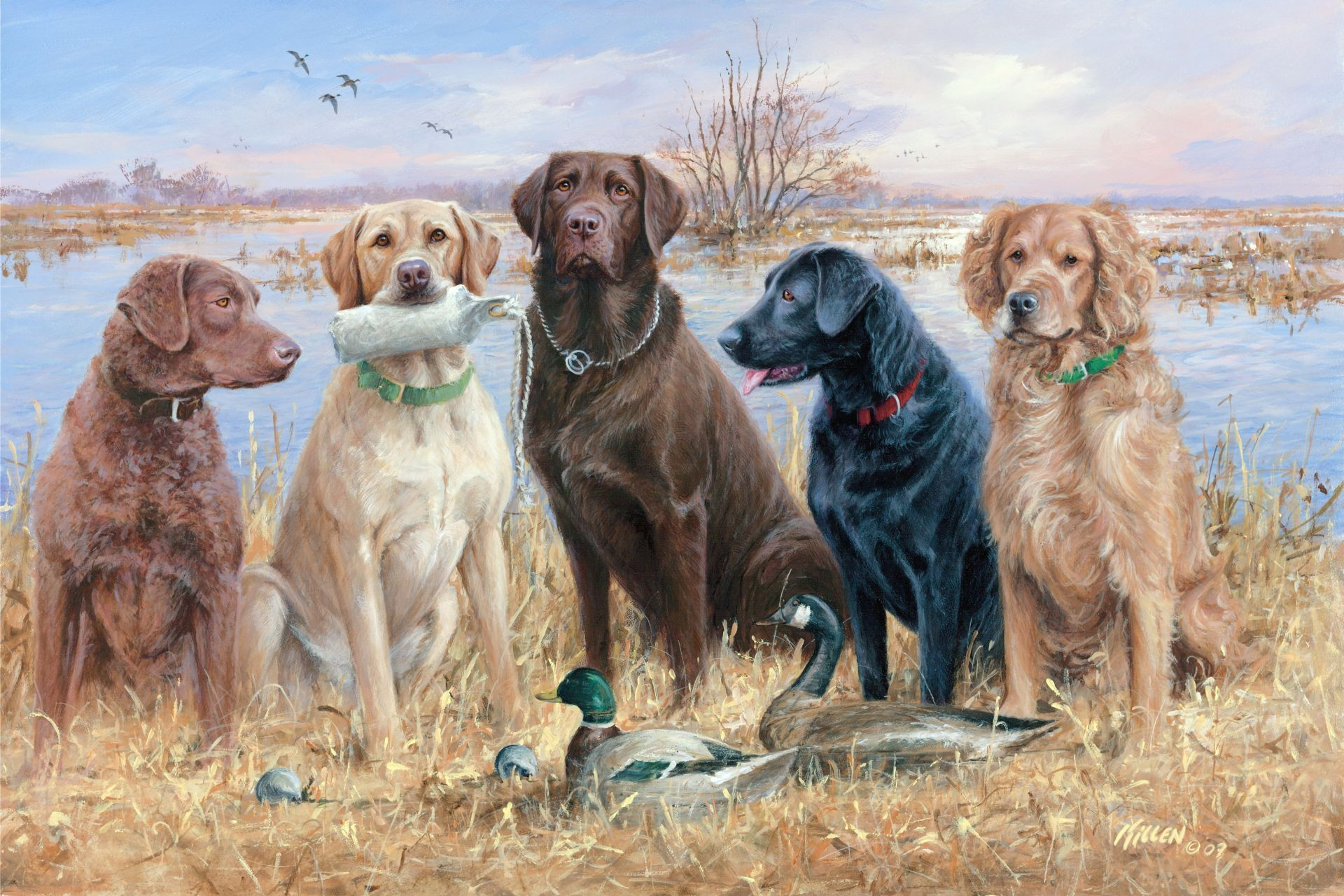 Res: 1920x1280, duck hunting dogs | Duck Hunting Desktop Wallpapers with Waterfowl Gallery