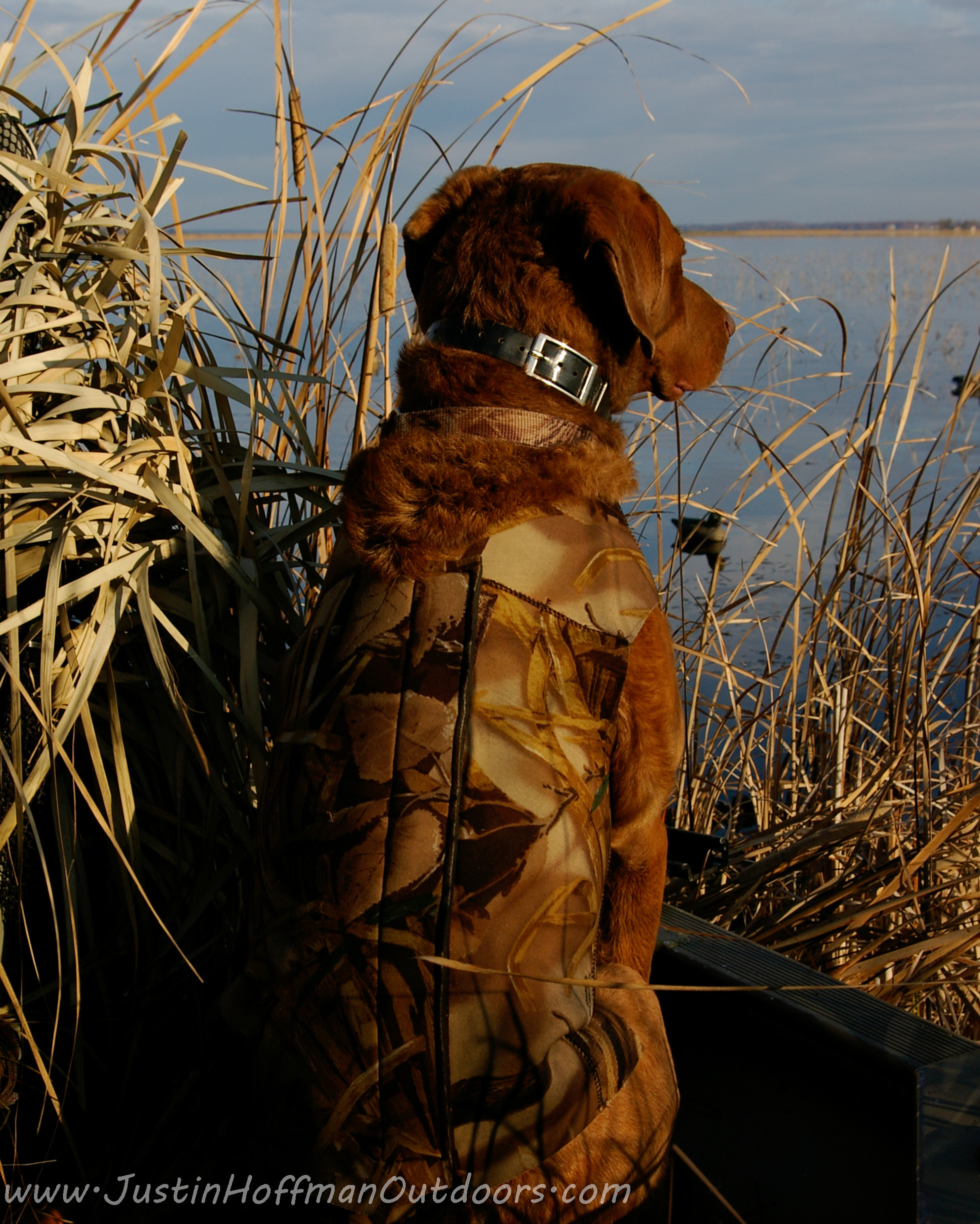 Res: 1959x2448, Duck Hunting Backgrounds ·① Hunting Dog Wallpapers ...