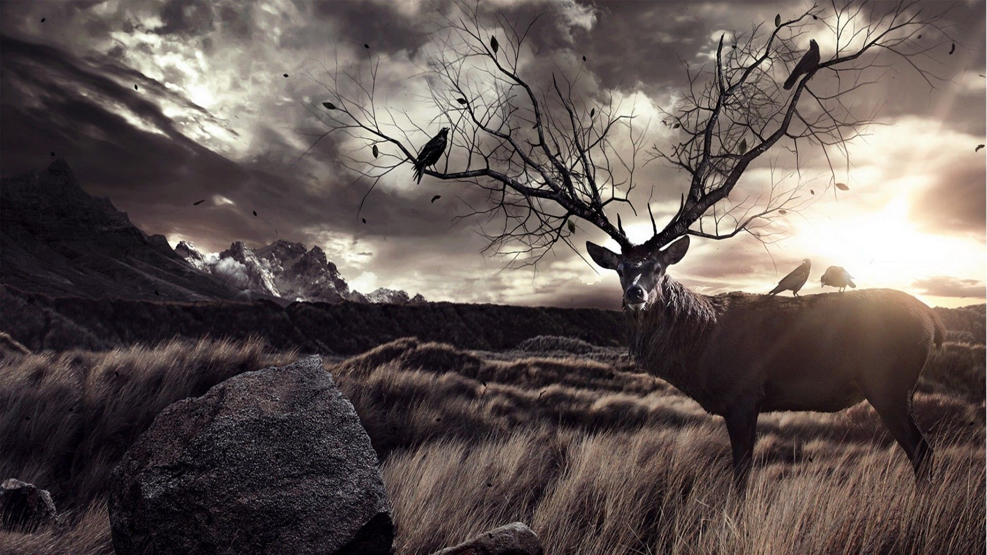 Res: 1920x1080, Deer Hunting Wallpapers HD Page 3 Of Wallpaper Wiki In