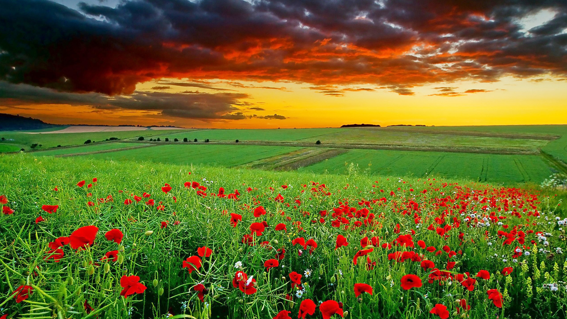 Res: 1920x1080,  Full HD Nature Wallpapers 1080p Desktop in Green Landscape with  Flowers | HD Wallpapers |