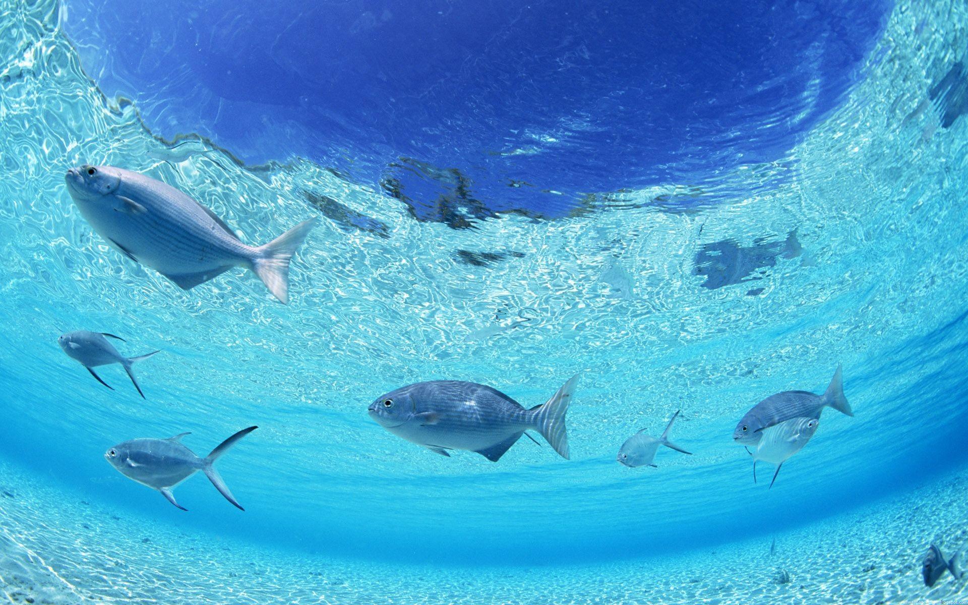 Res: 1920x1200, Photos of Ocean Scenes | Dynamic ocean scenes desktop wallpaper--