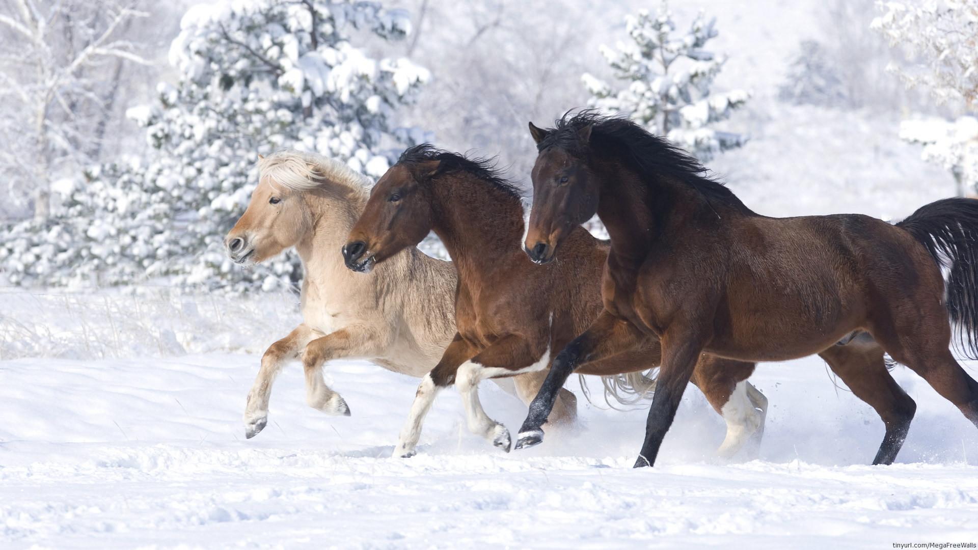 Res: 1920x1080, Animal - Horse Animal Snow Running Wallpaper