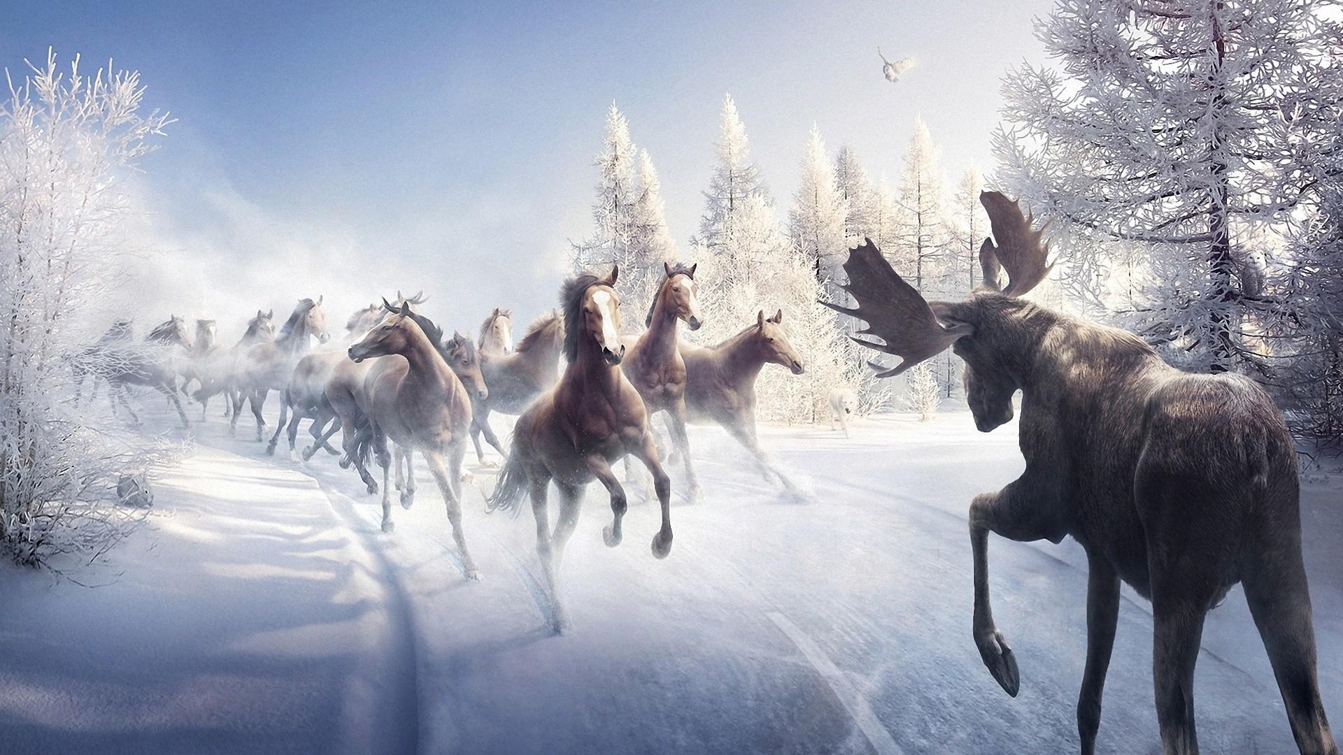 Res: 1920x1080, Horses, Christmas Tree, Snow, Winter, Road, Bird, Elk