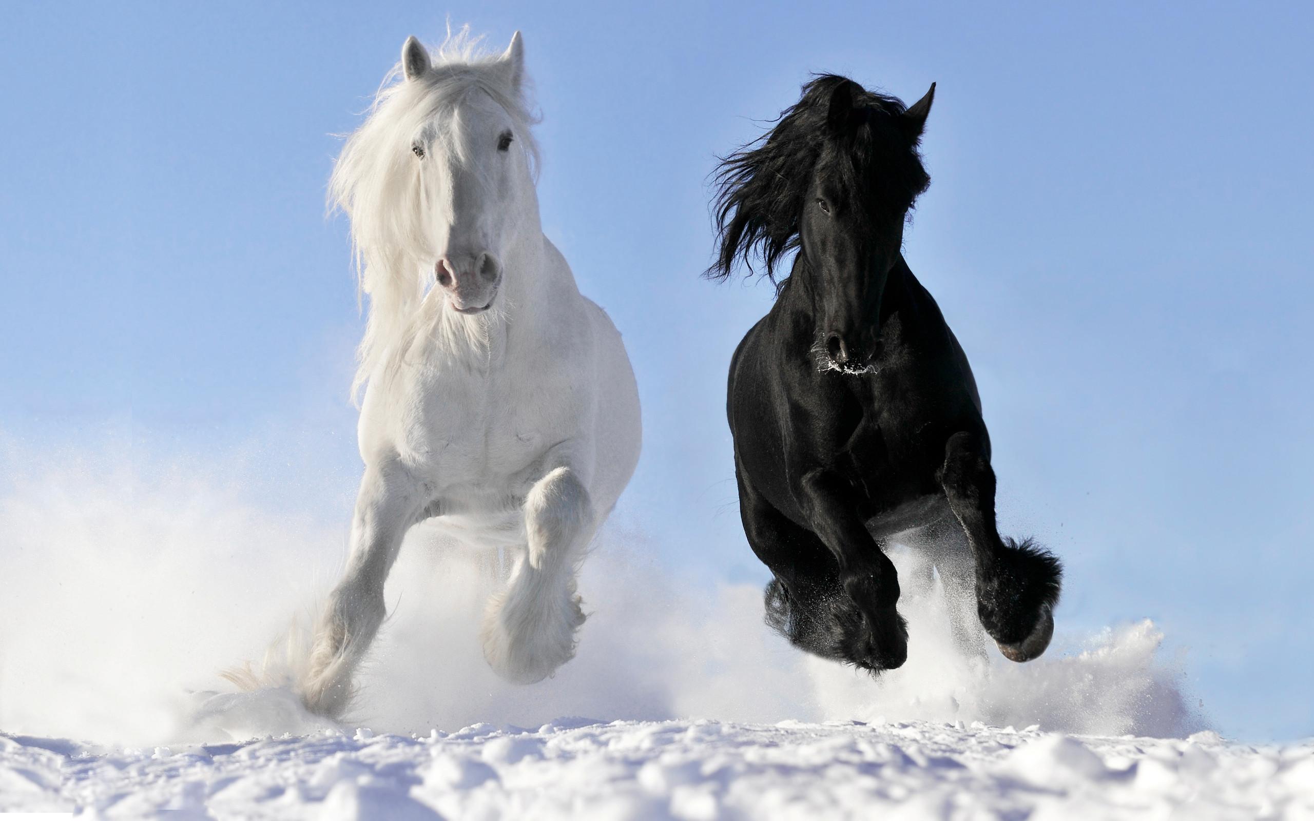 Res: 2560x1600, HD Horse Wallpaper Desktop.