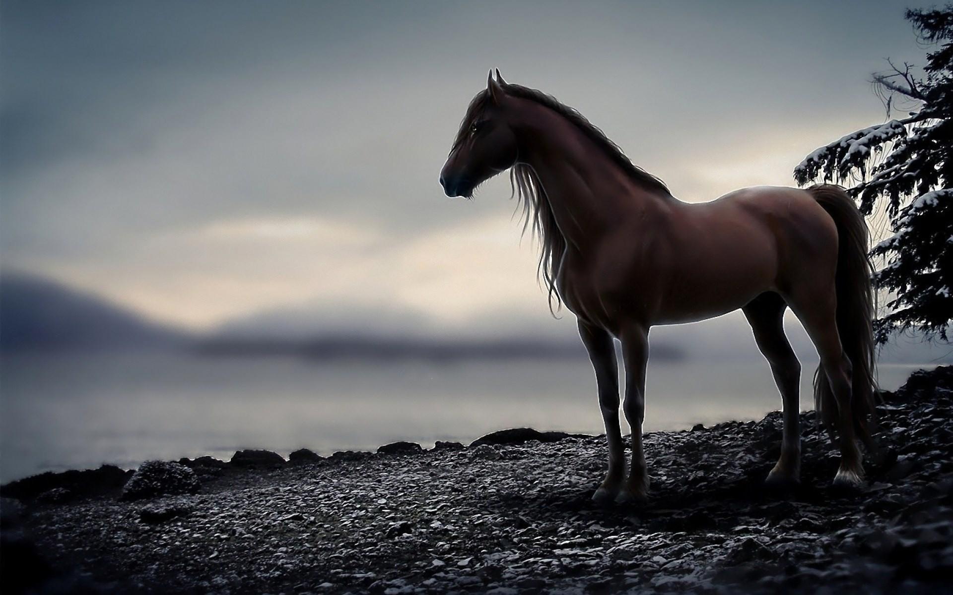 Res: 1920x1200, wallpaper hd horse