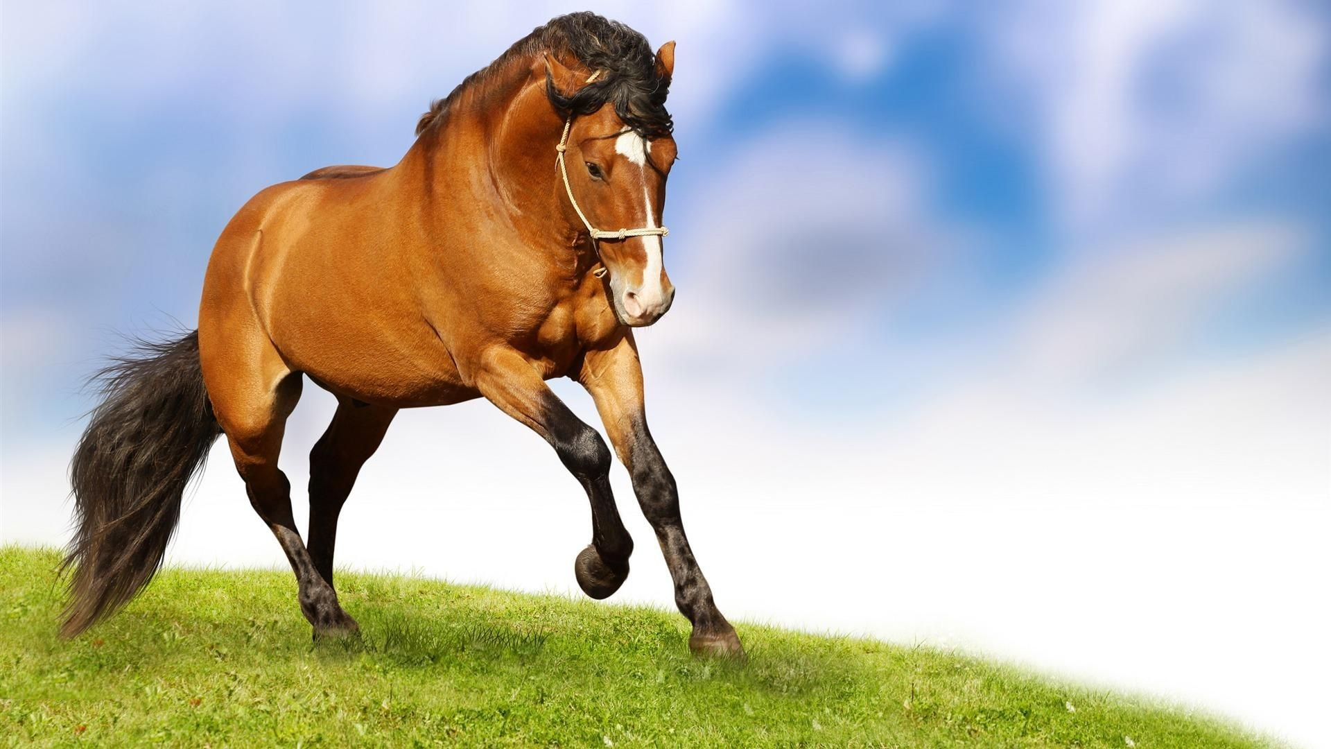 Res: 1920x1080, Christmas Horses Wallpaper for Computer | Home » Animals pictures » Horse  wallpapers