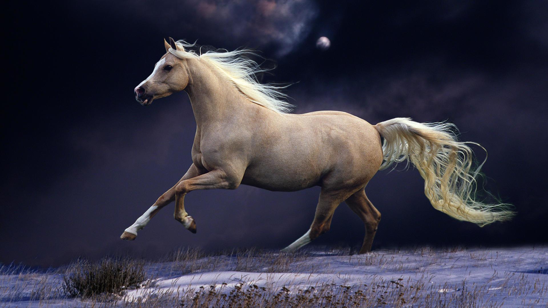 Res: 1920x1080, Horse Wallpaper