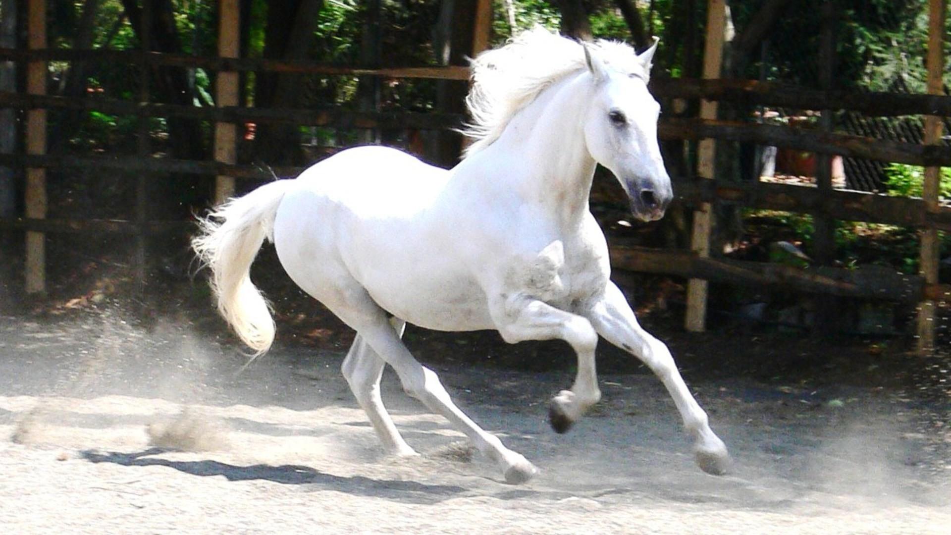 Res: 1920x1080, White Horses