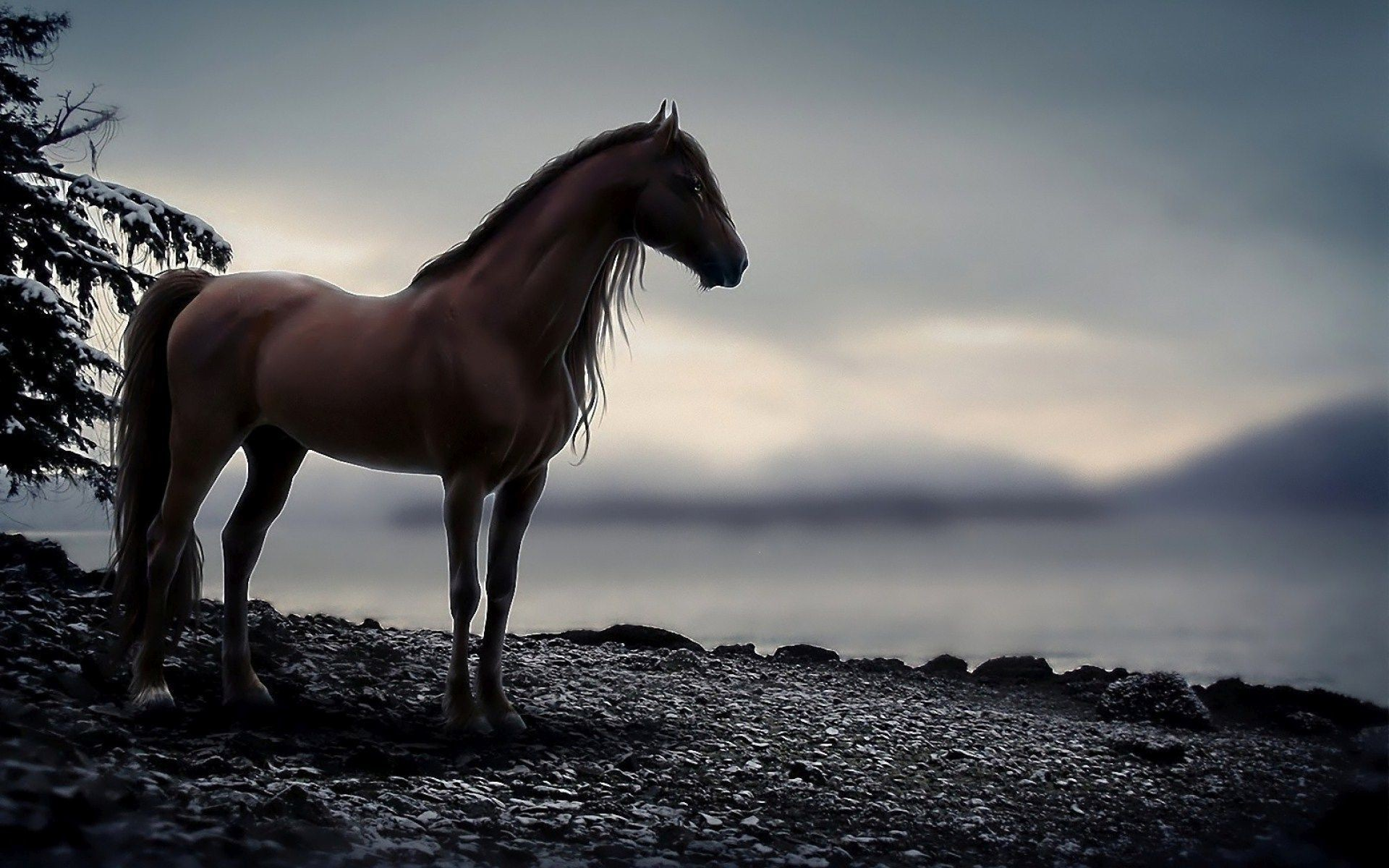 Res: 1920x1200, Horse Wallpapers HD 16148 - HD Wallpapers Site